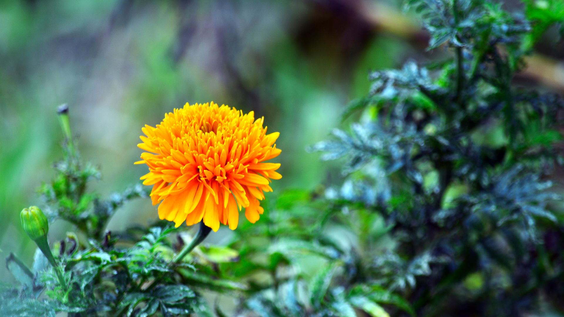 Оранжевый цветок в лесу