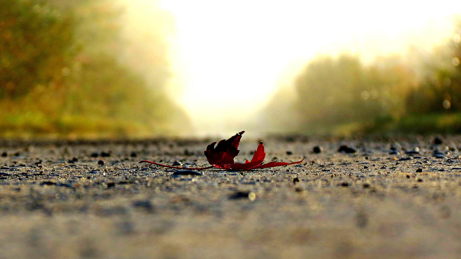 Упавший кленовый лист ранней осенью
