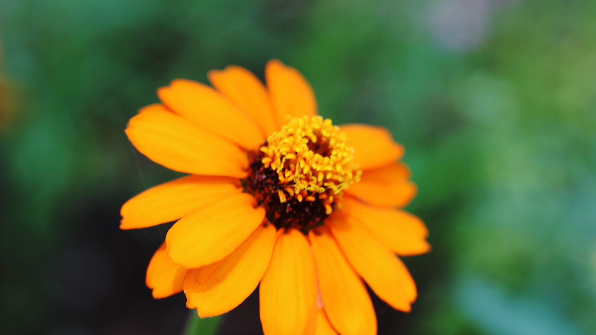 Оранжевый цветок