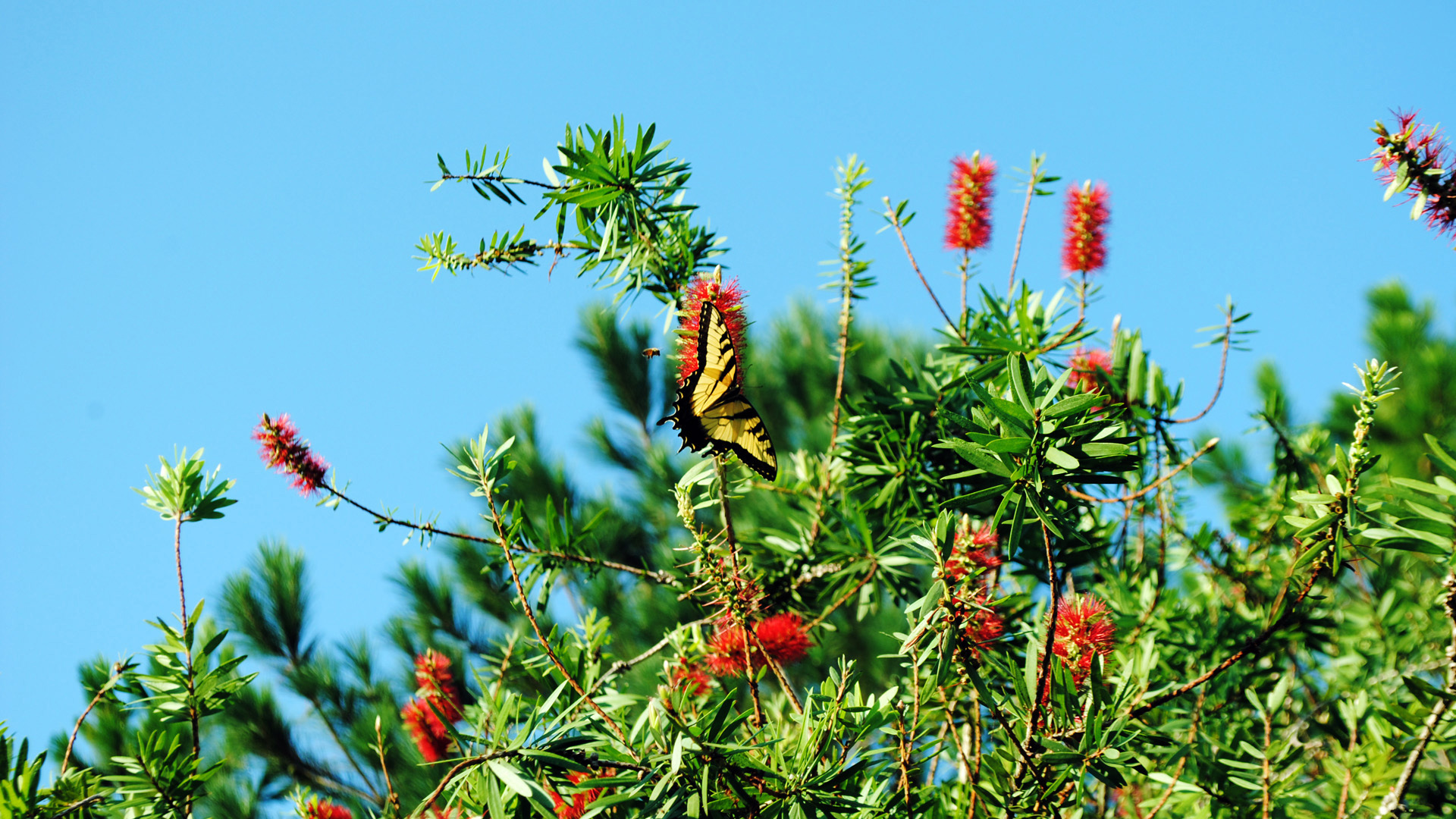 Бабочка среди цветов
