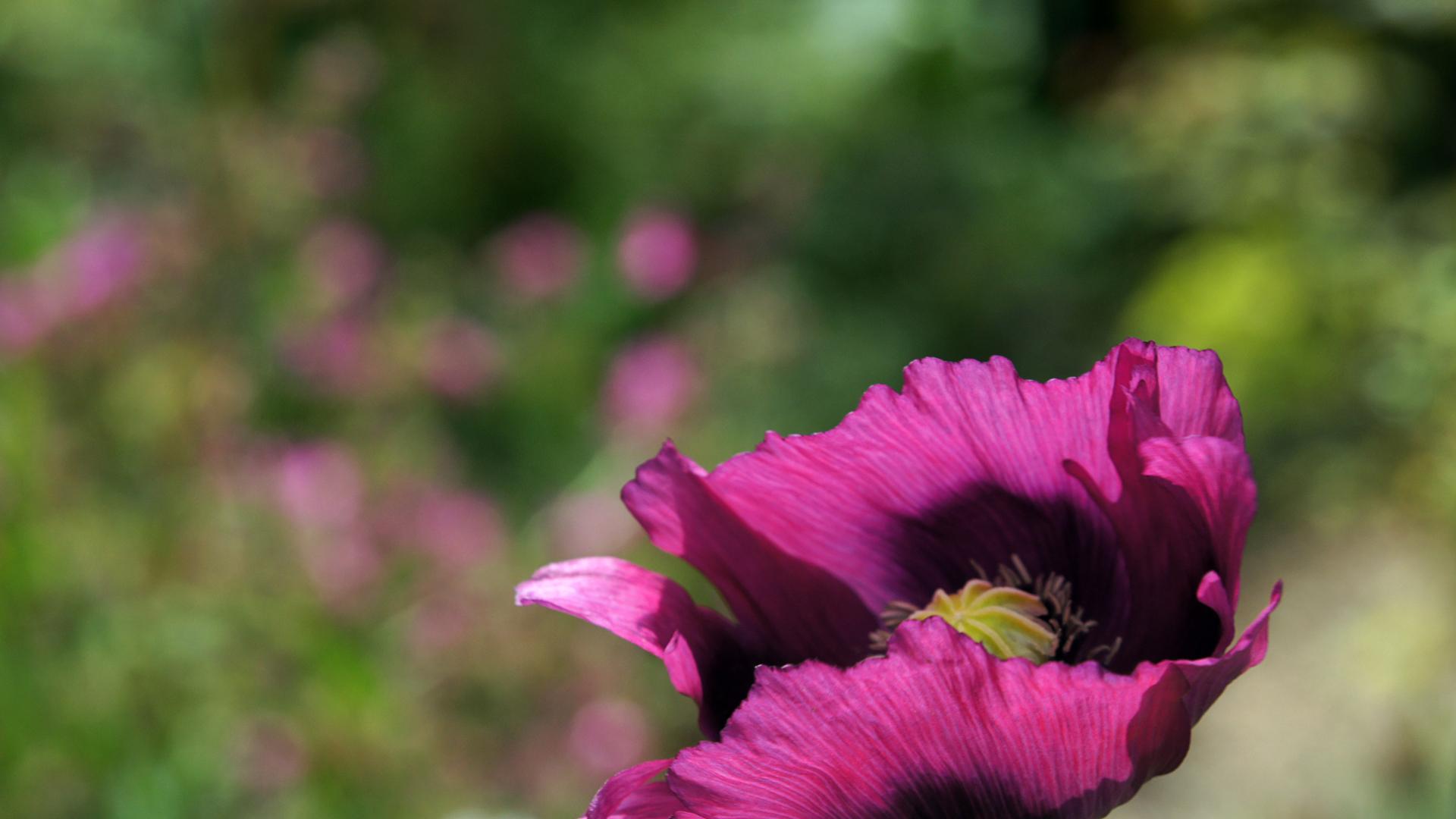 Темно-фиолетовый цветок