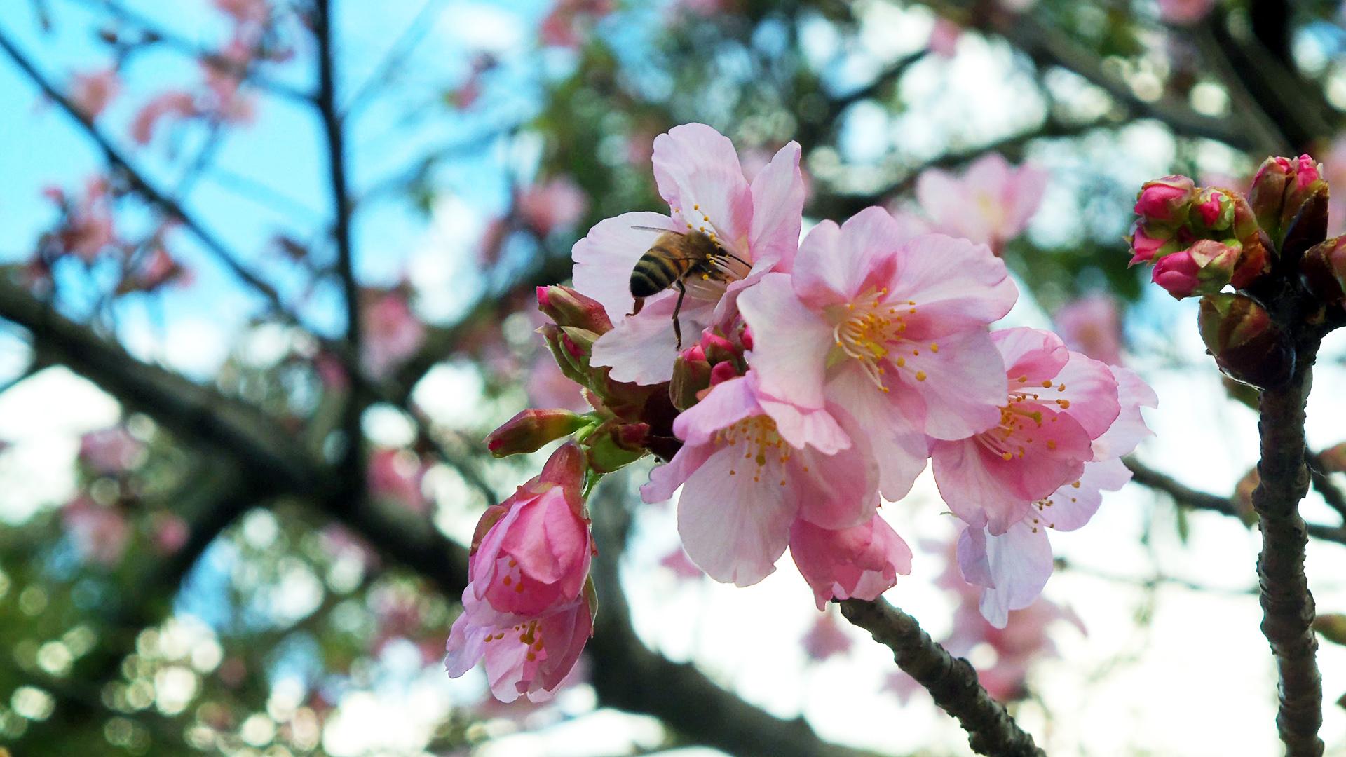 Пчела на розовом цветке