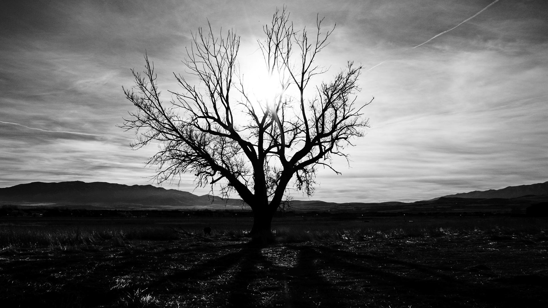 Чёрное дерево