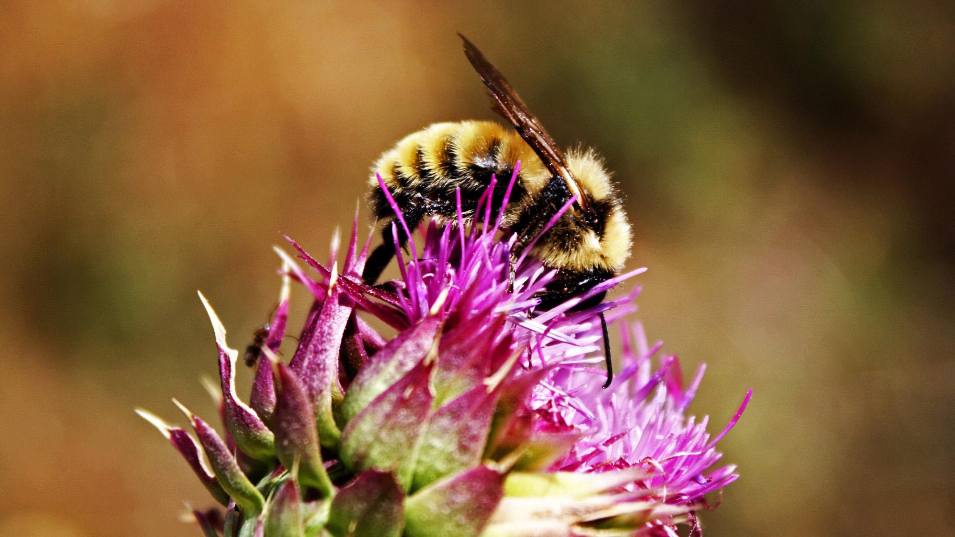 Пчела на красивом цветке
