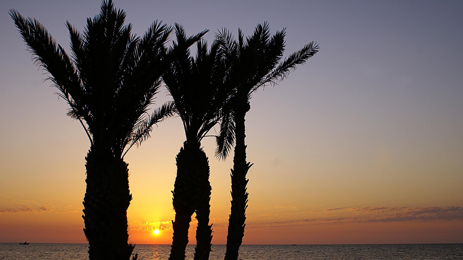 Закат между пальм