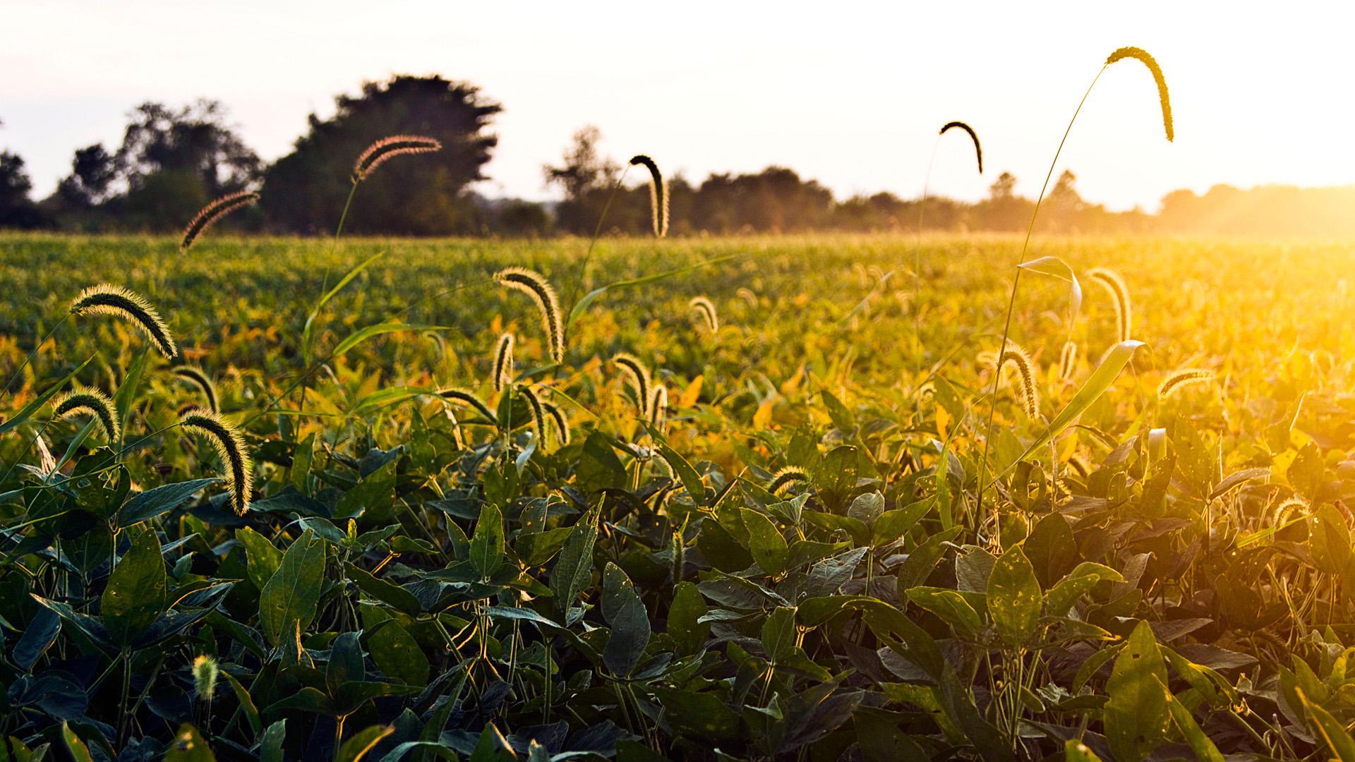 Солнечное поле