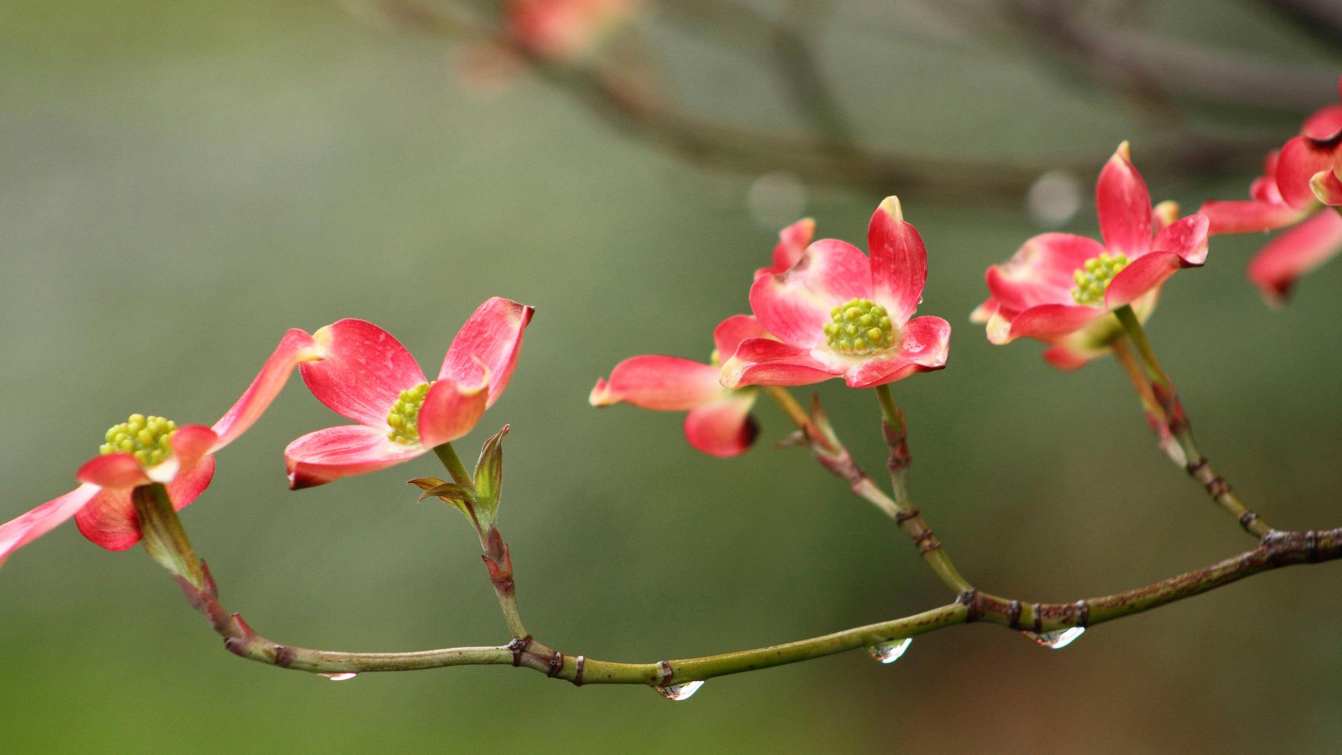 Фантастические красные цветы