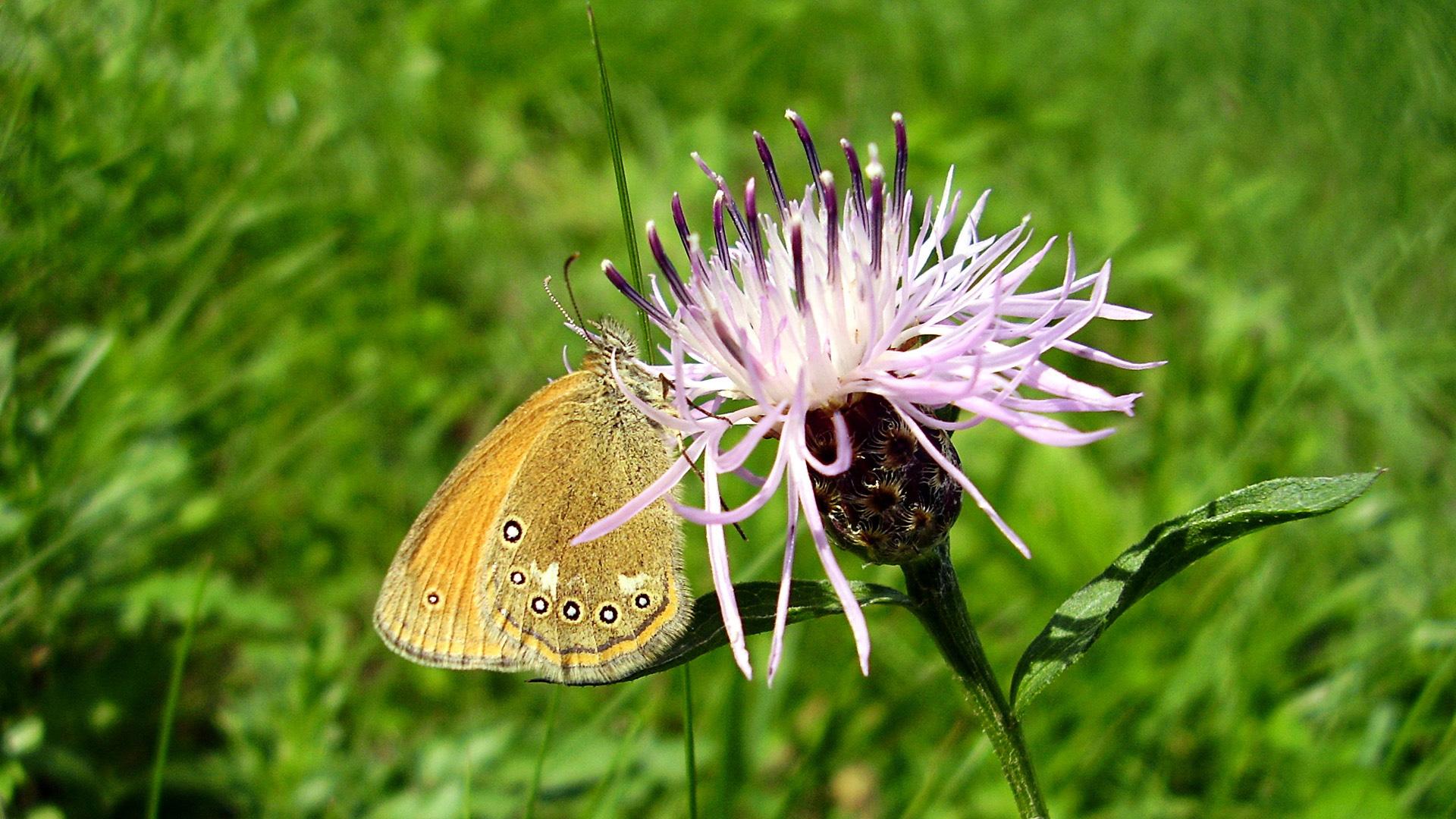 Бабочка на красивом цветке