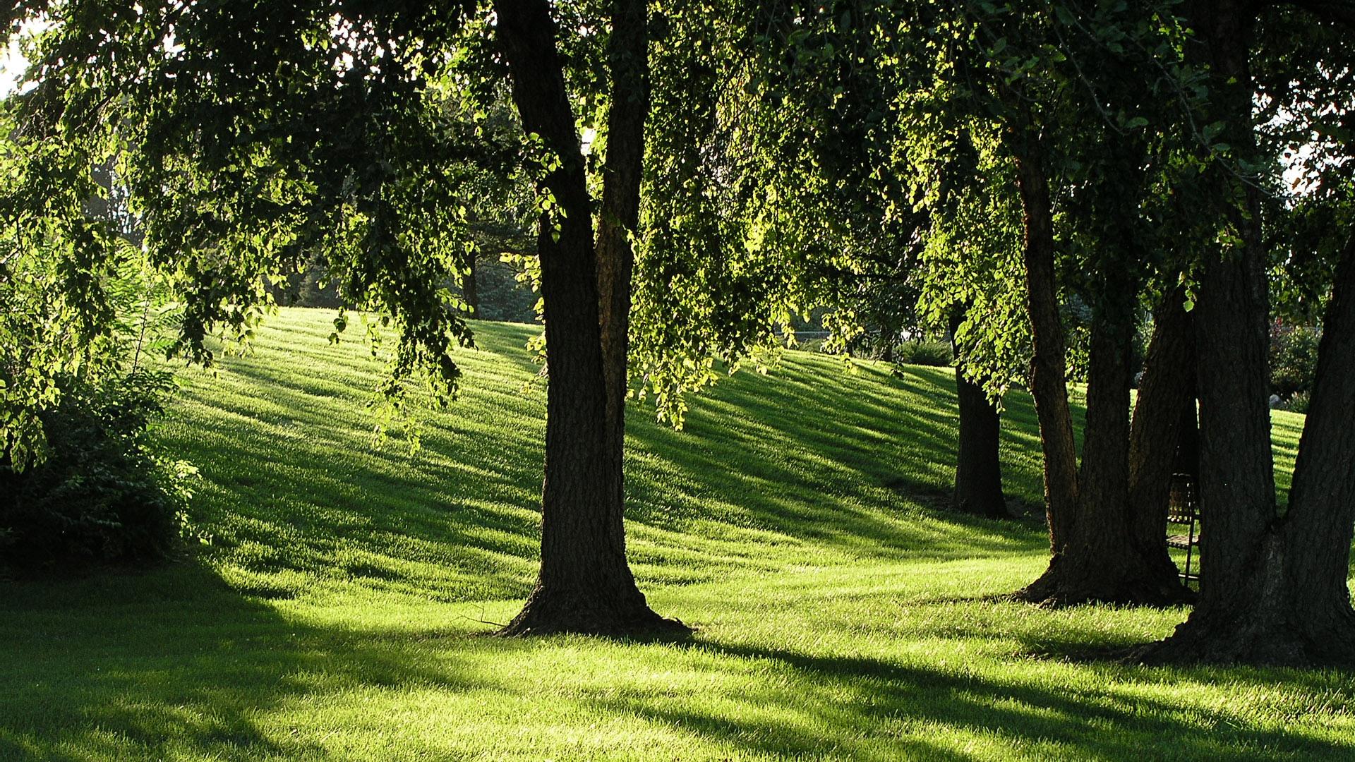 Зелёная поляна с деревьями