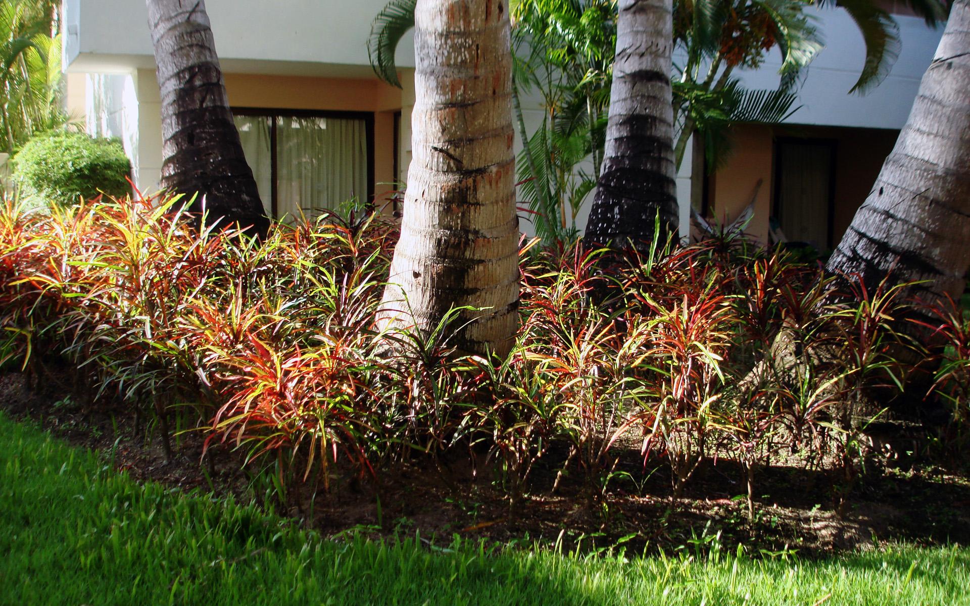 Основание тропических деревьев