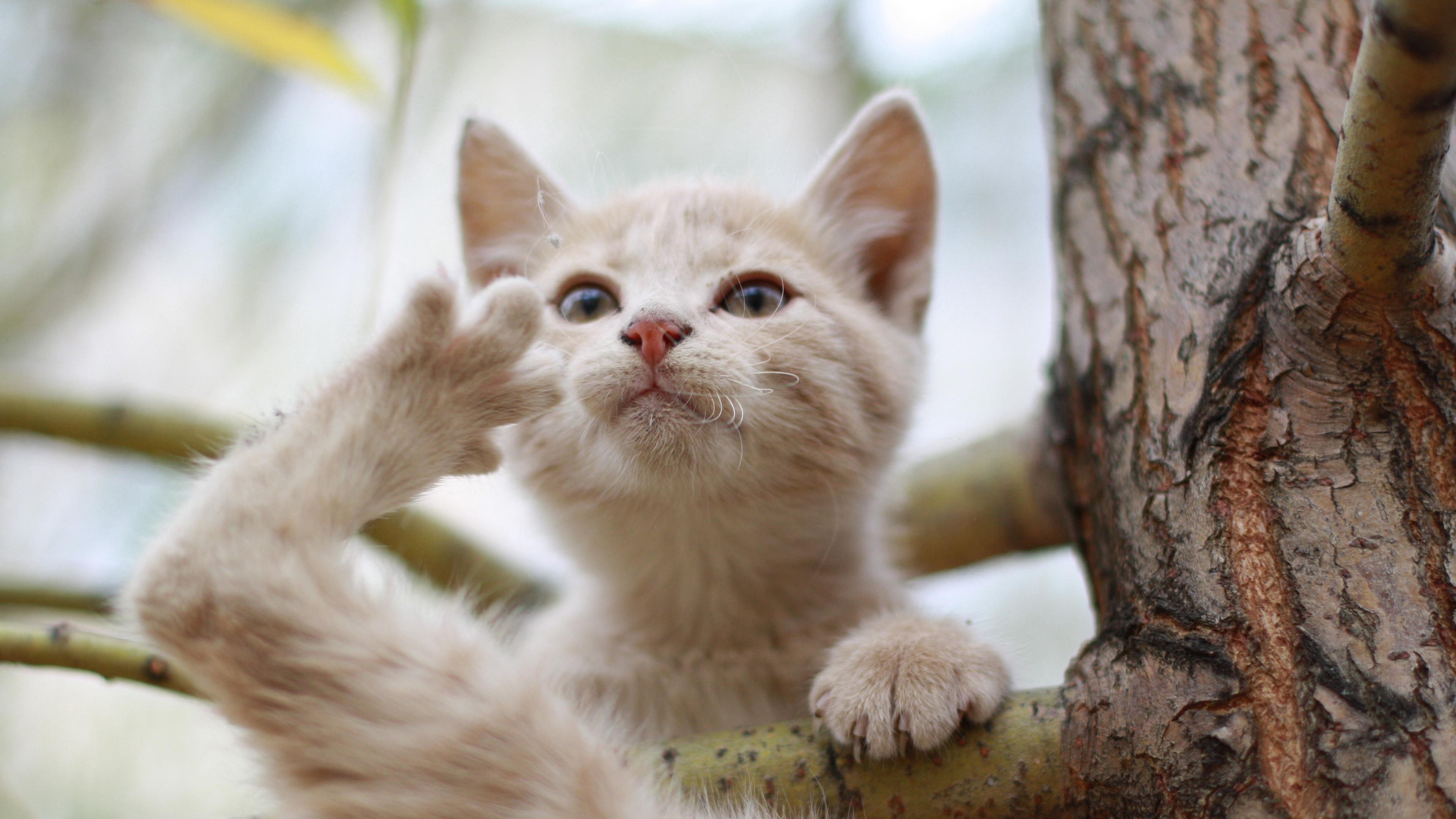 Cмешной кот