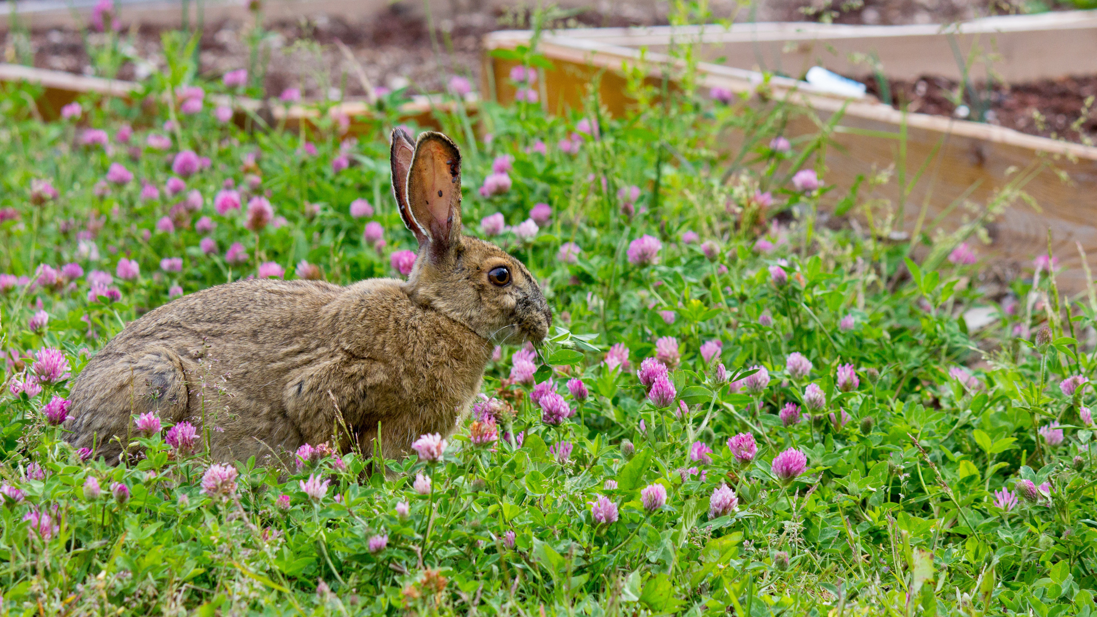 Заяц в траве