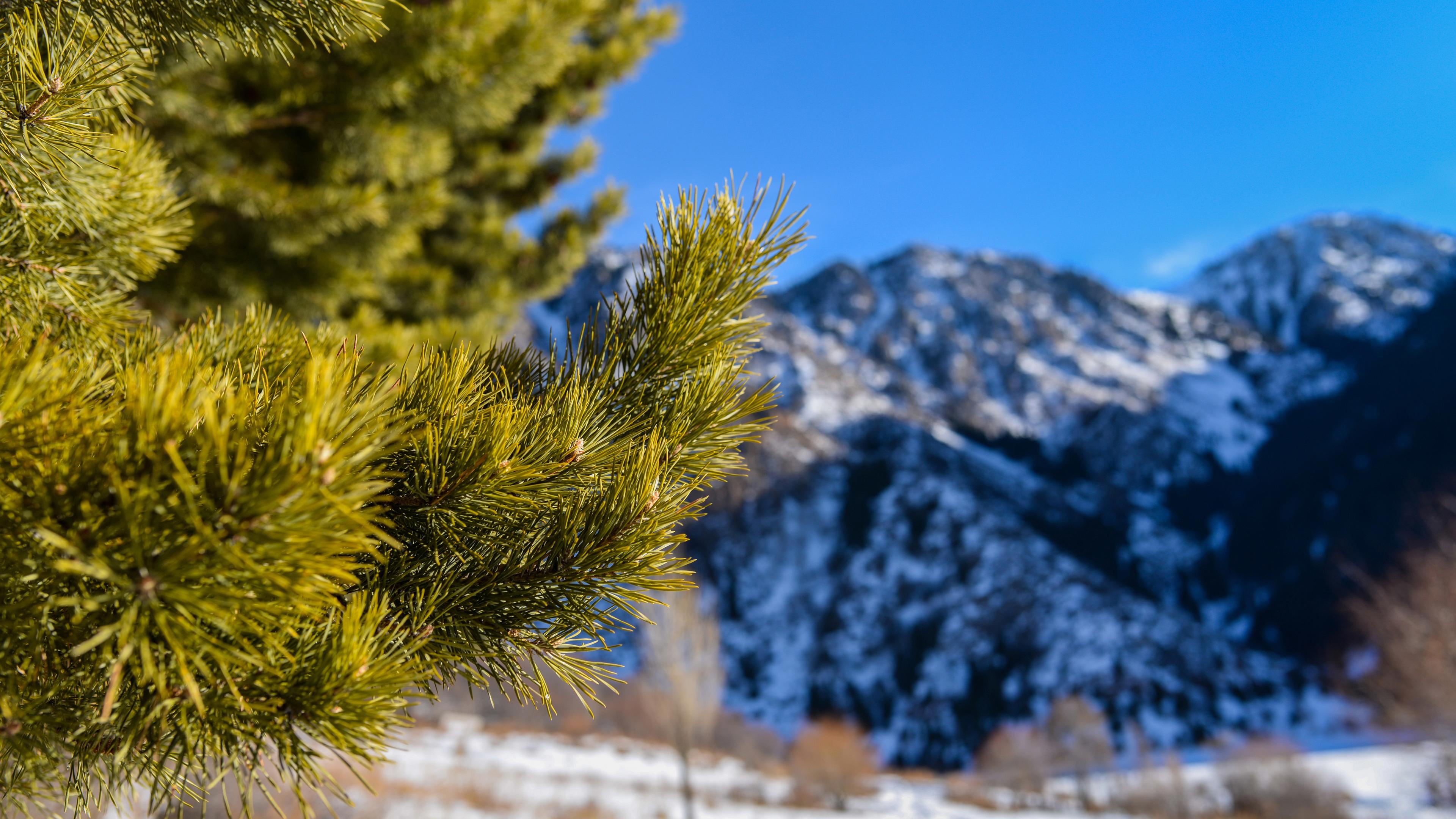 Горы в снегу