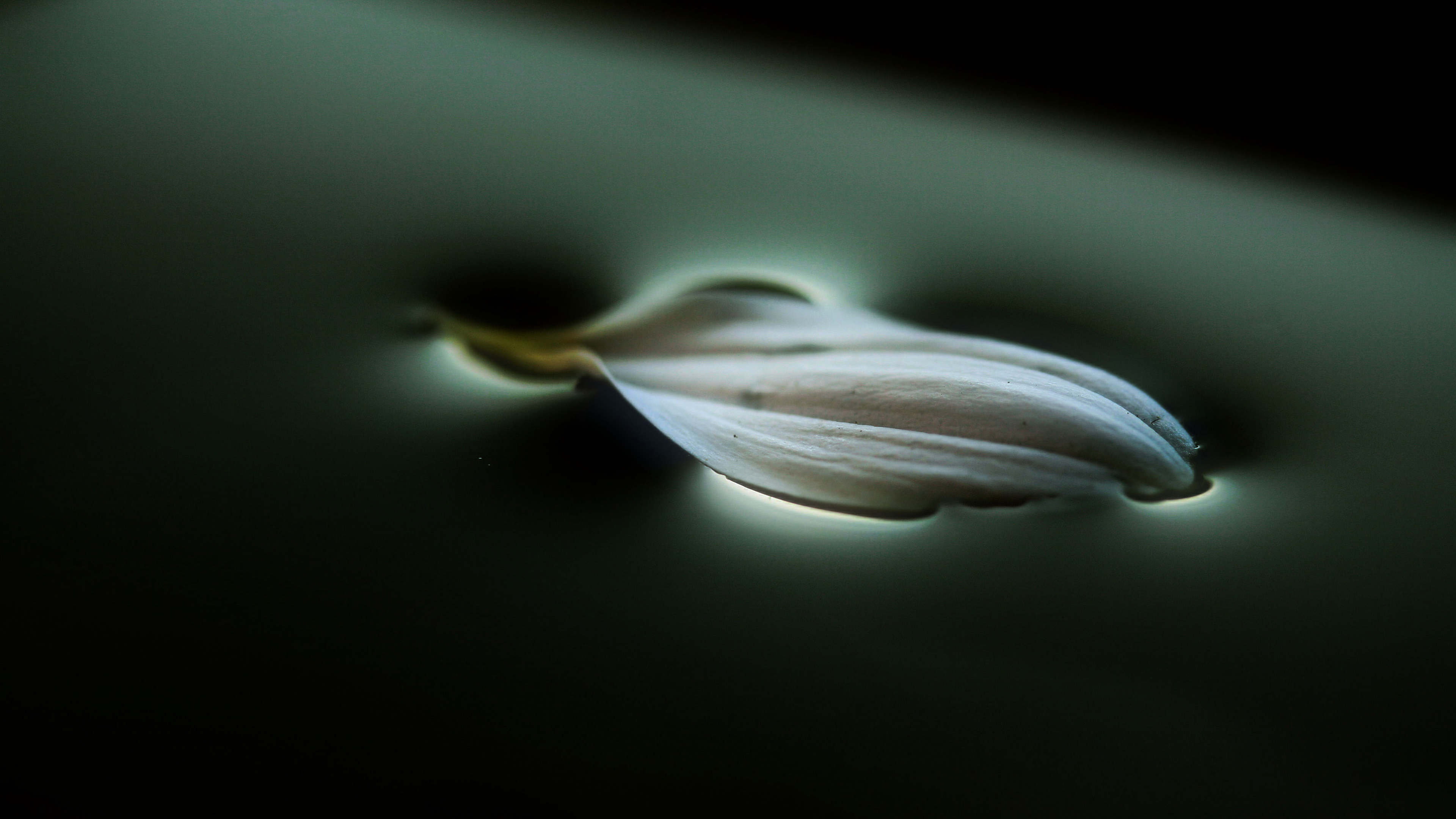 Лепесток цветка