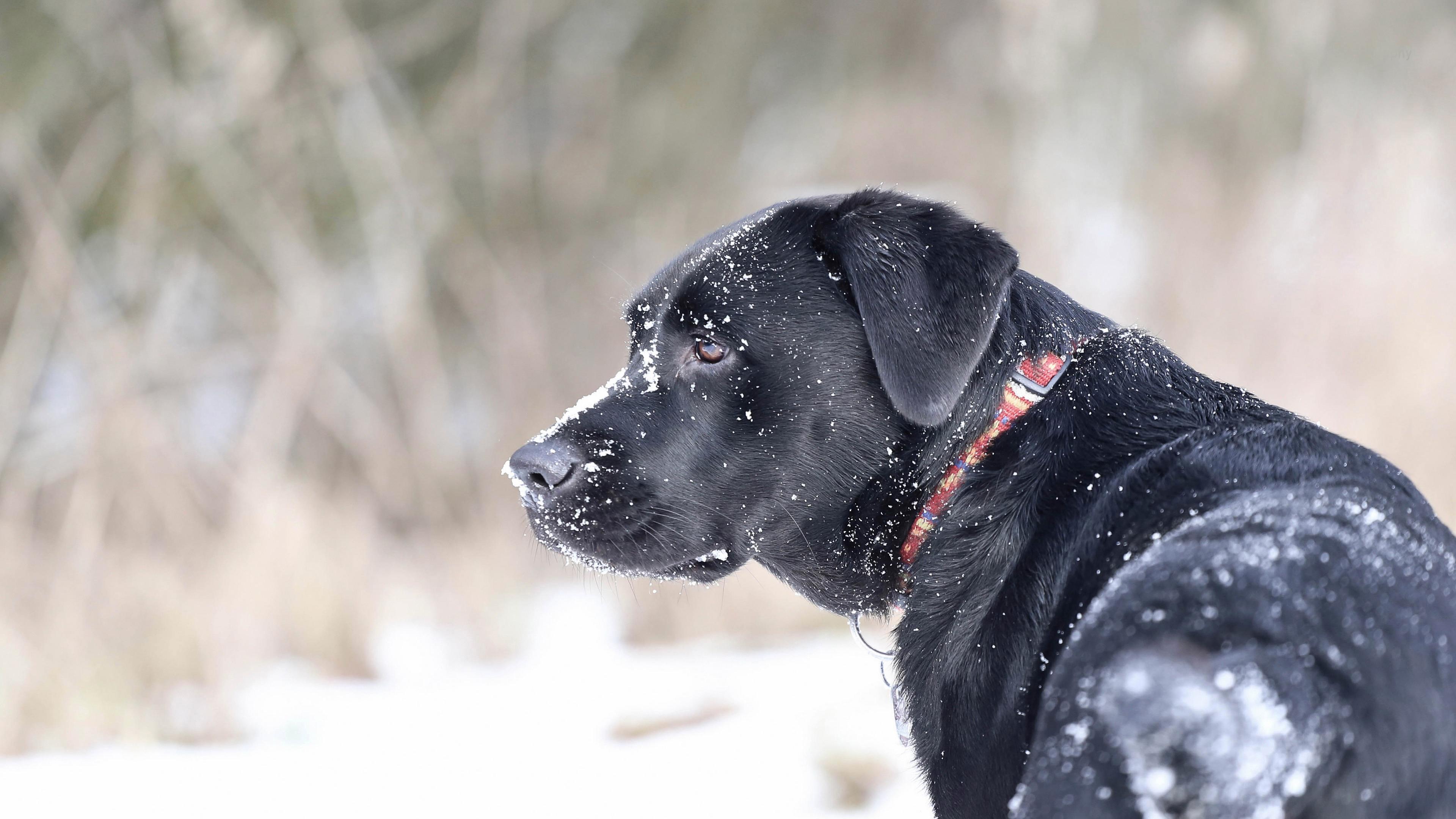 Собака и снег