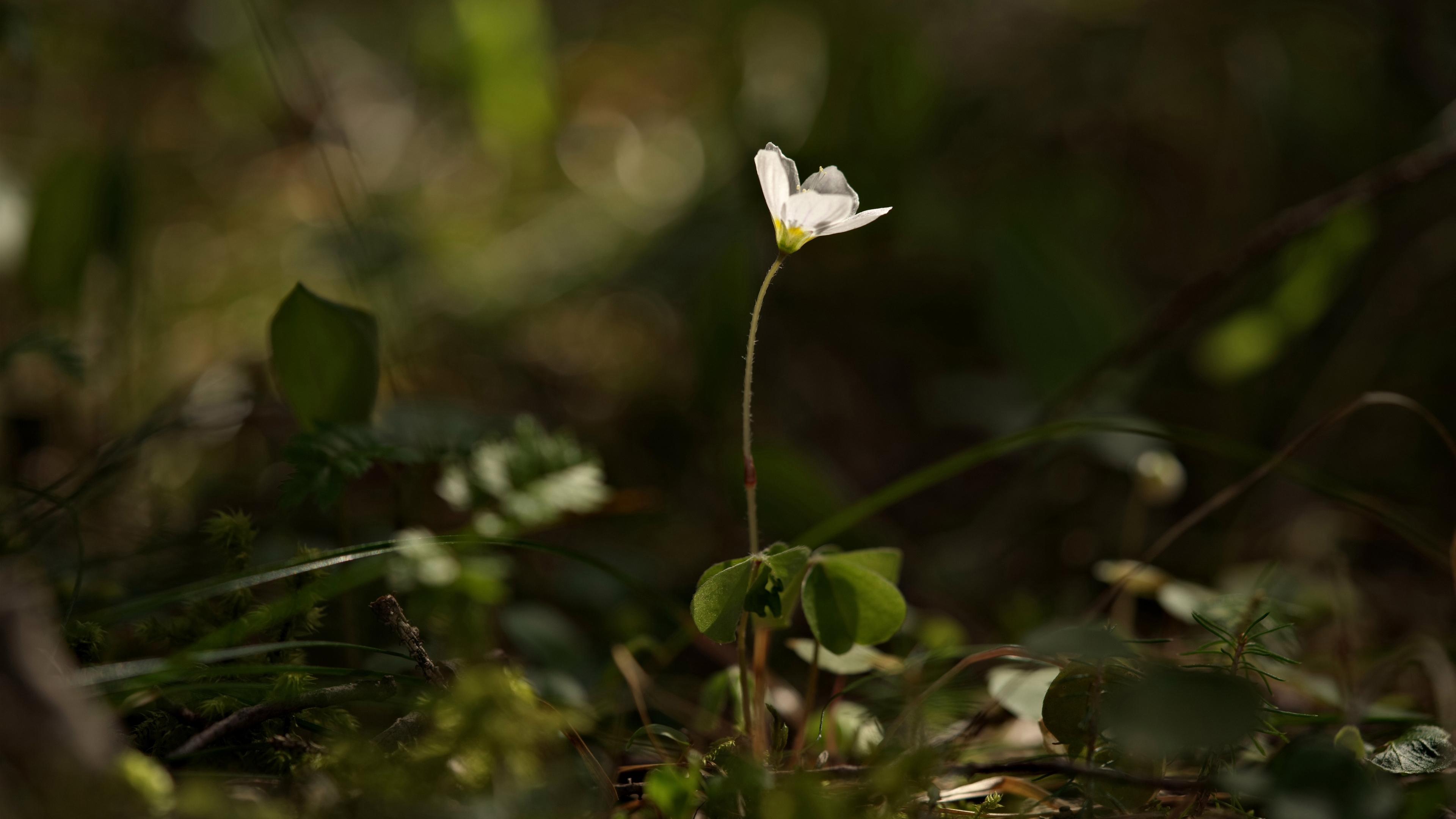 Цветок осени