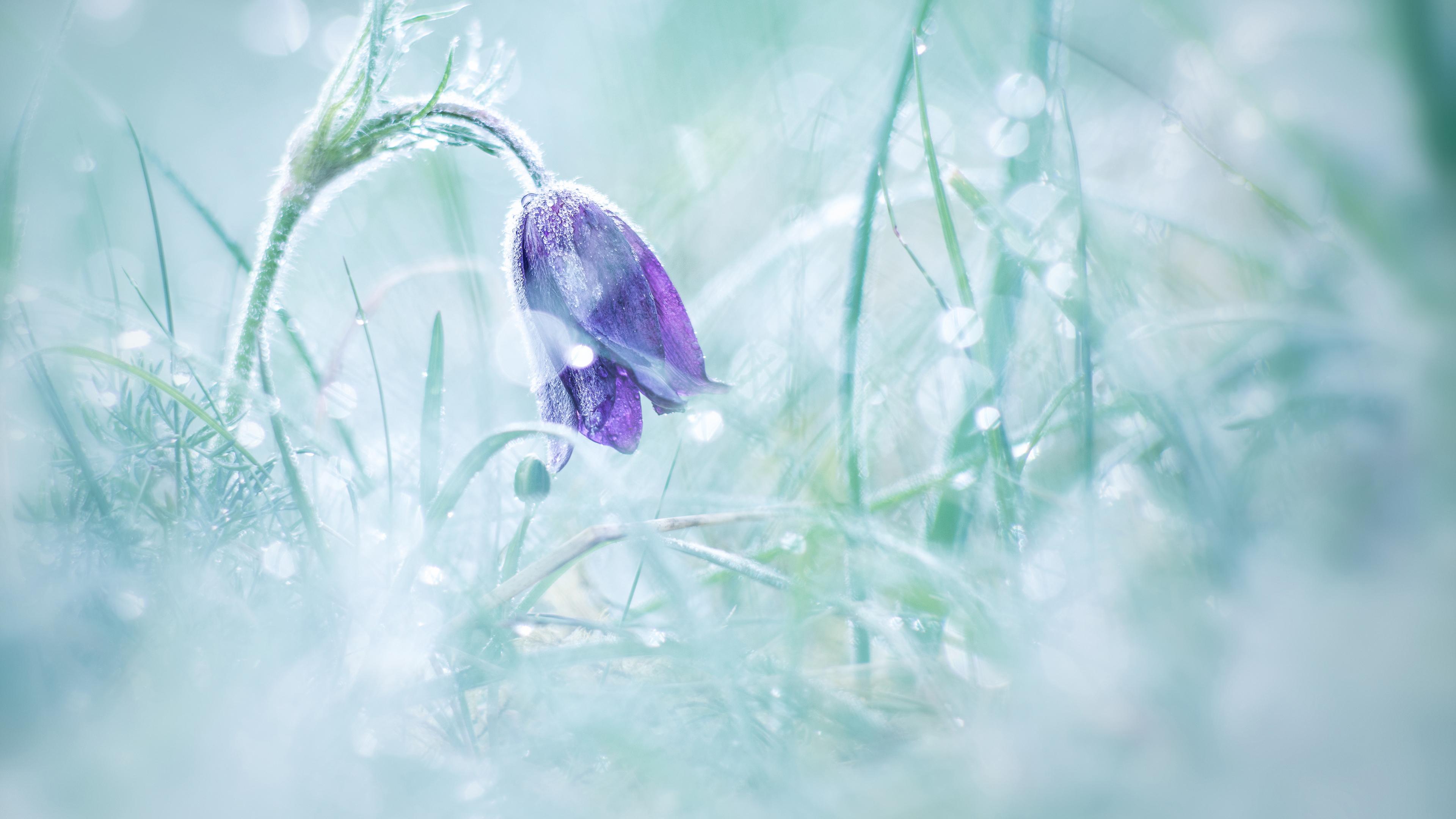 Колокольчик в снегу