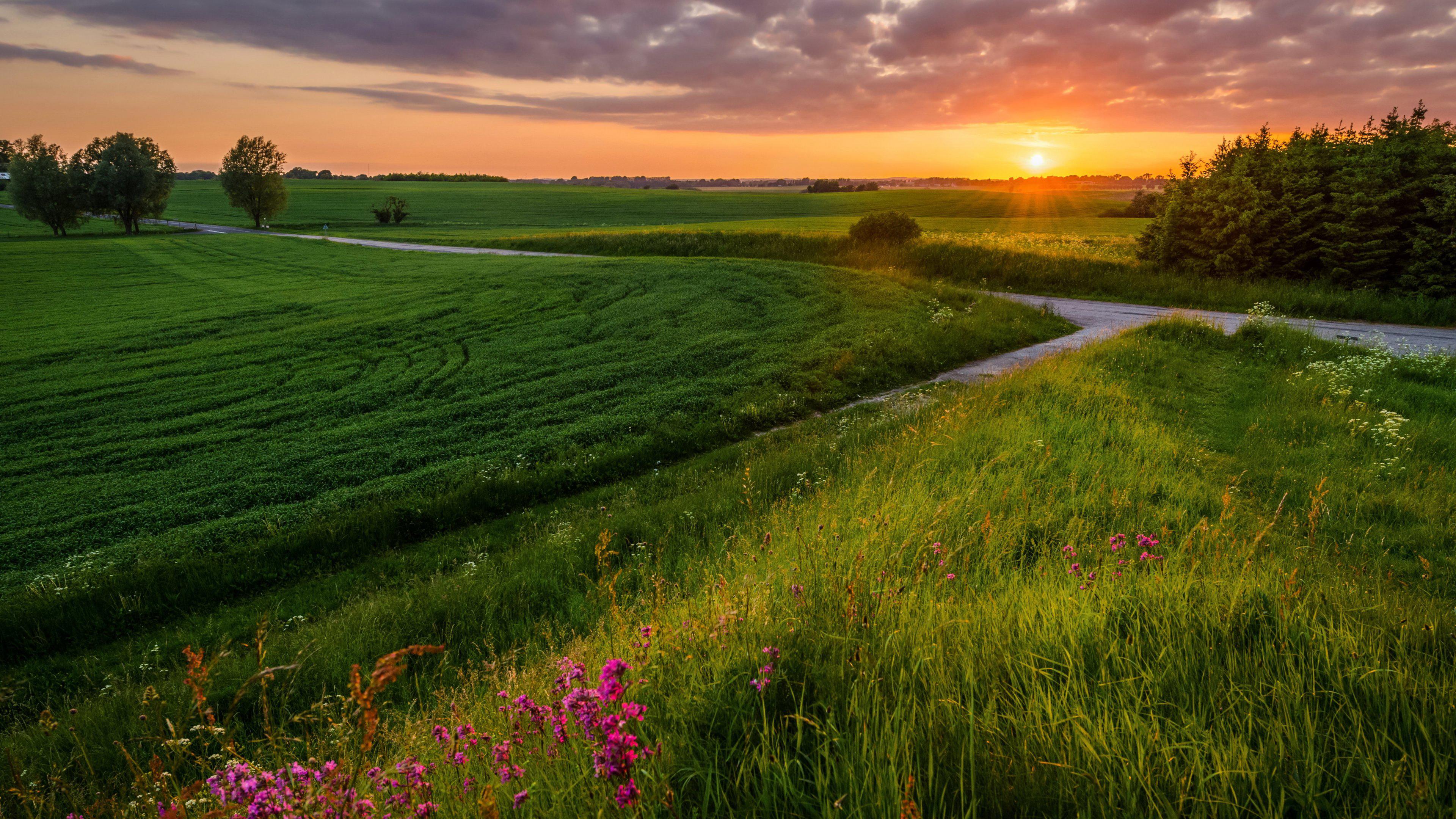 Зеленое поле