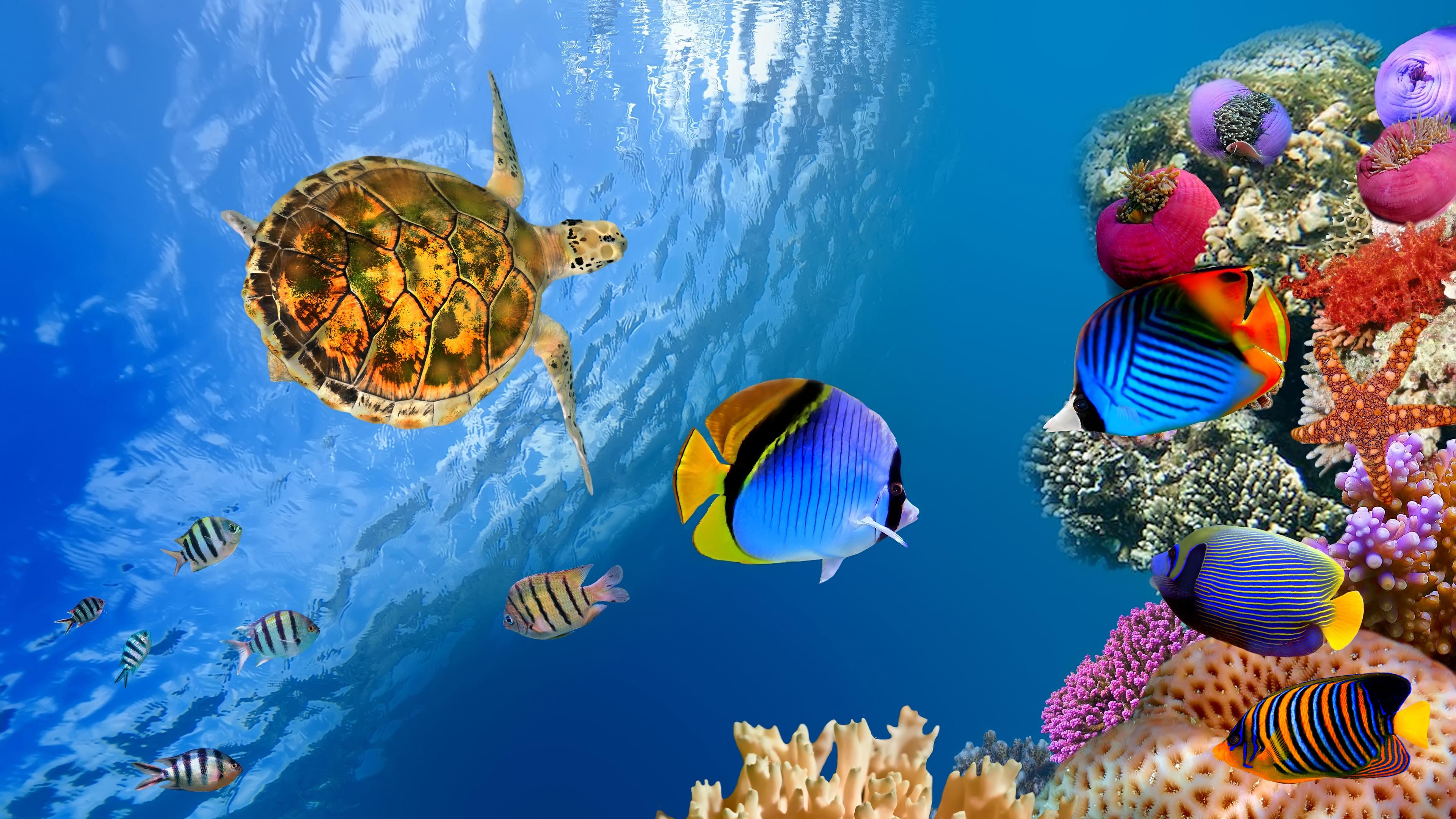 Подводный мир моря