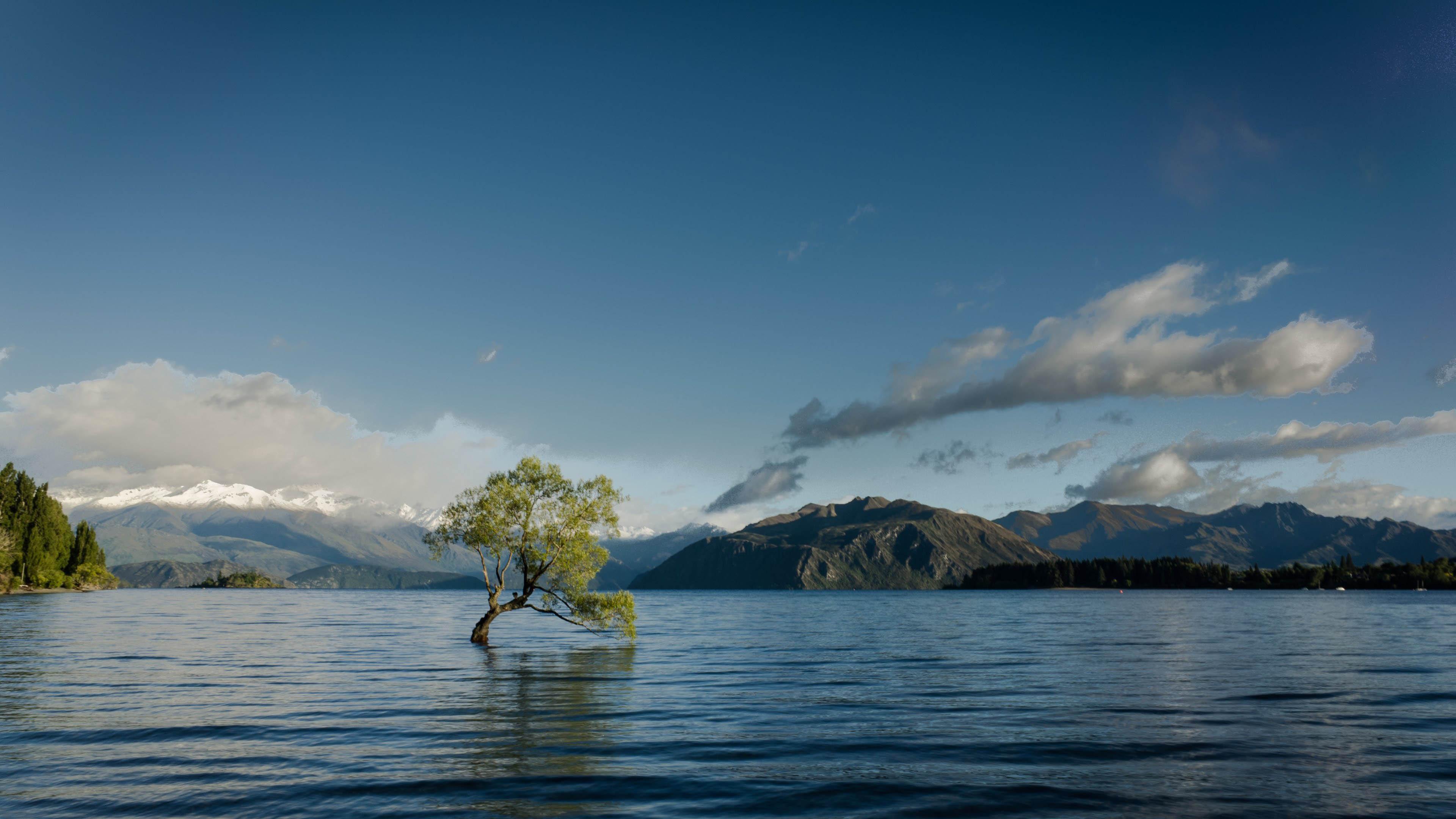 Одинокое дерево в озере