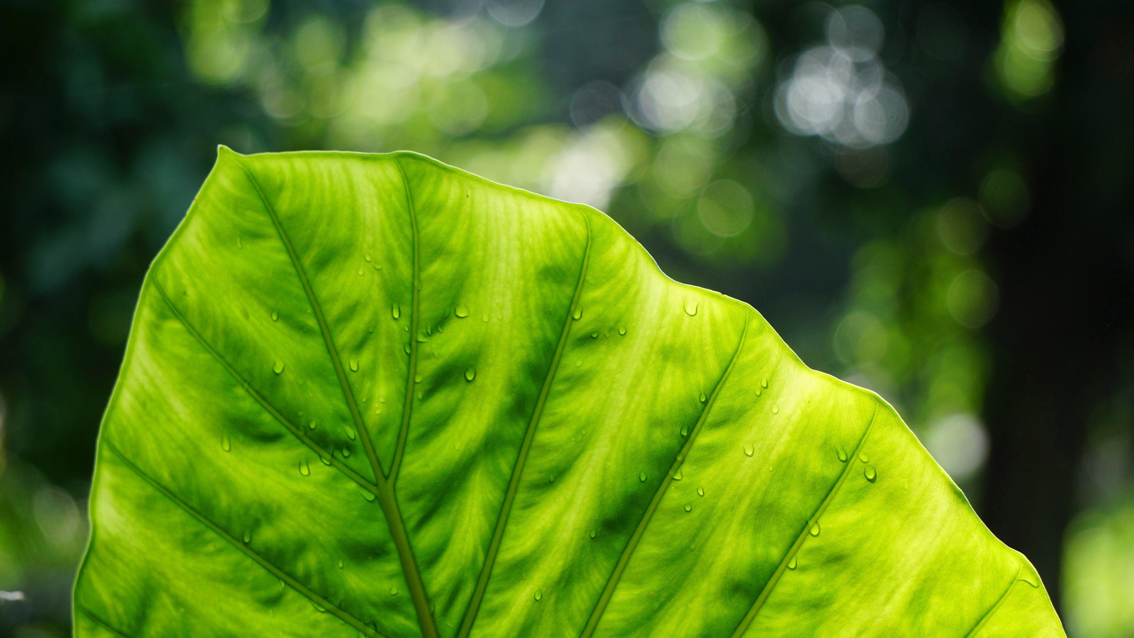Ярко-зеленый лист
