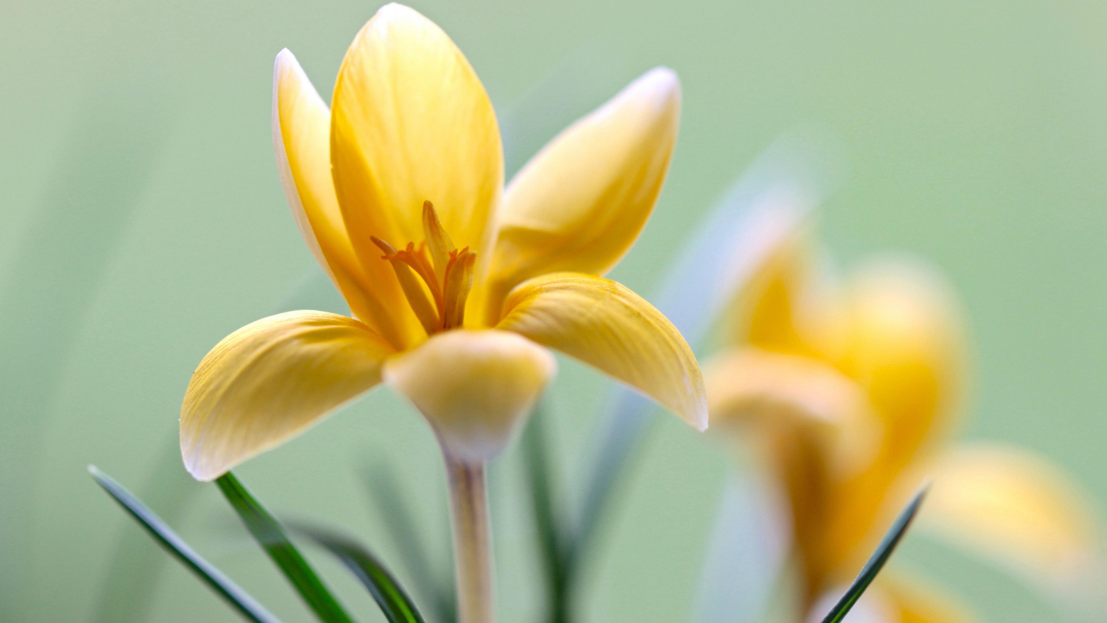 Цветок весны