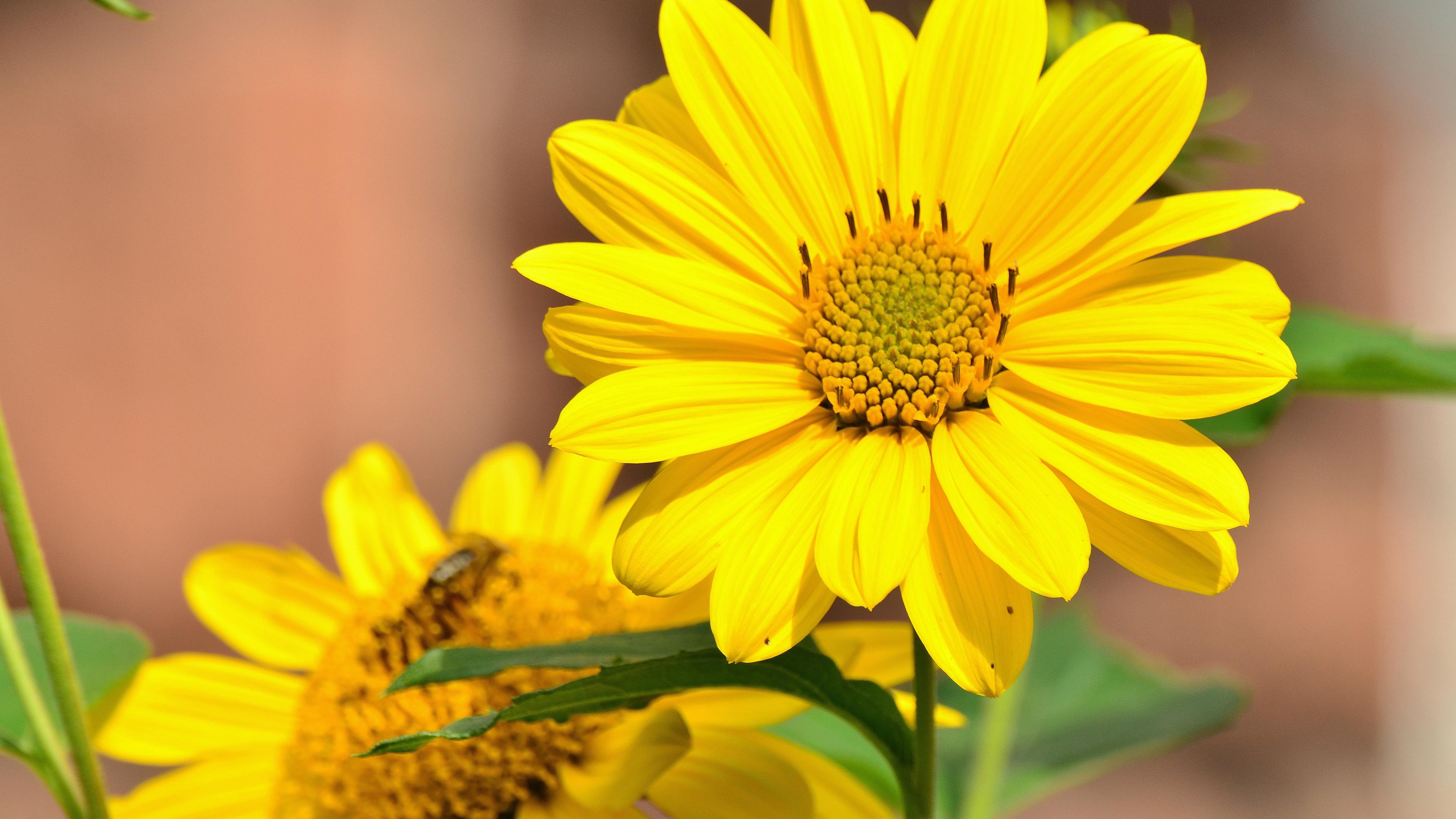 Цветы солнечные