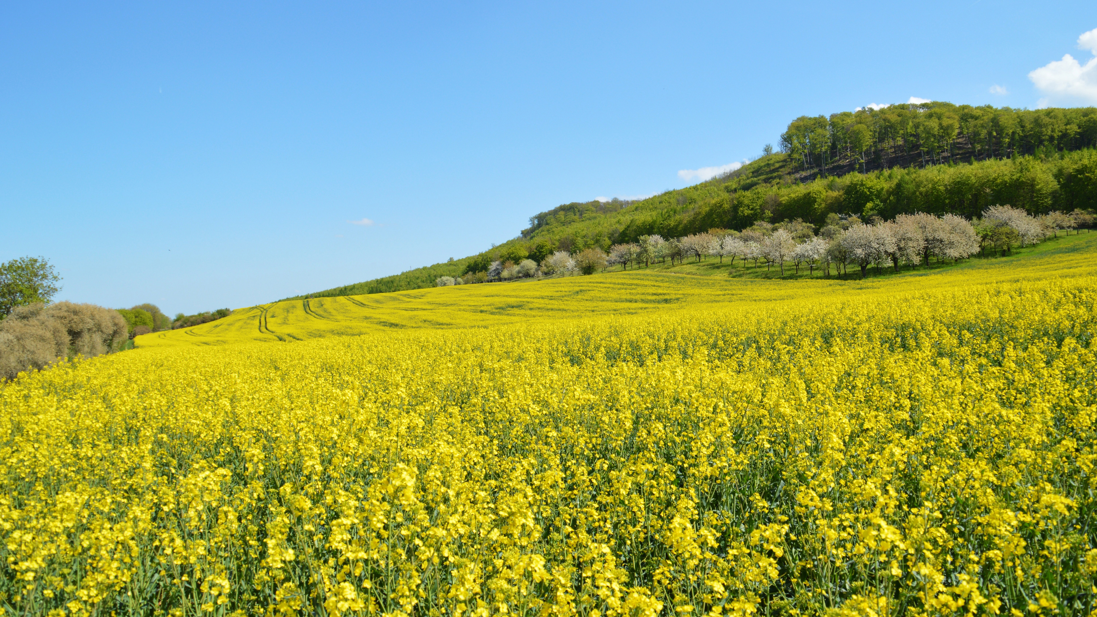 Желтое поле