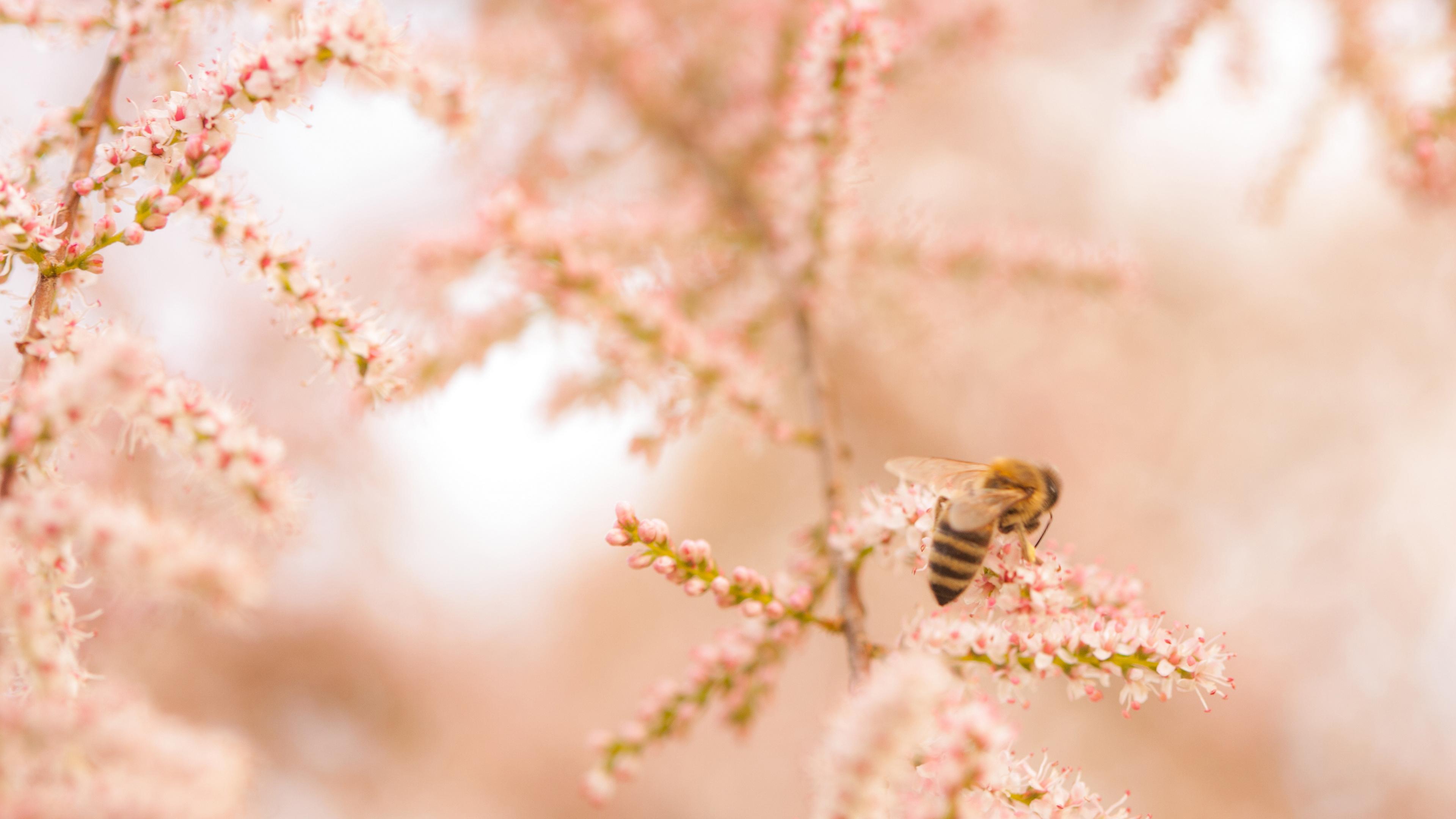 Пчела в цветах