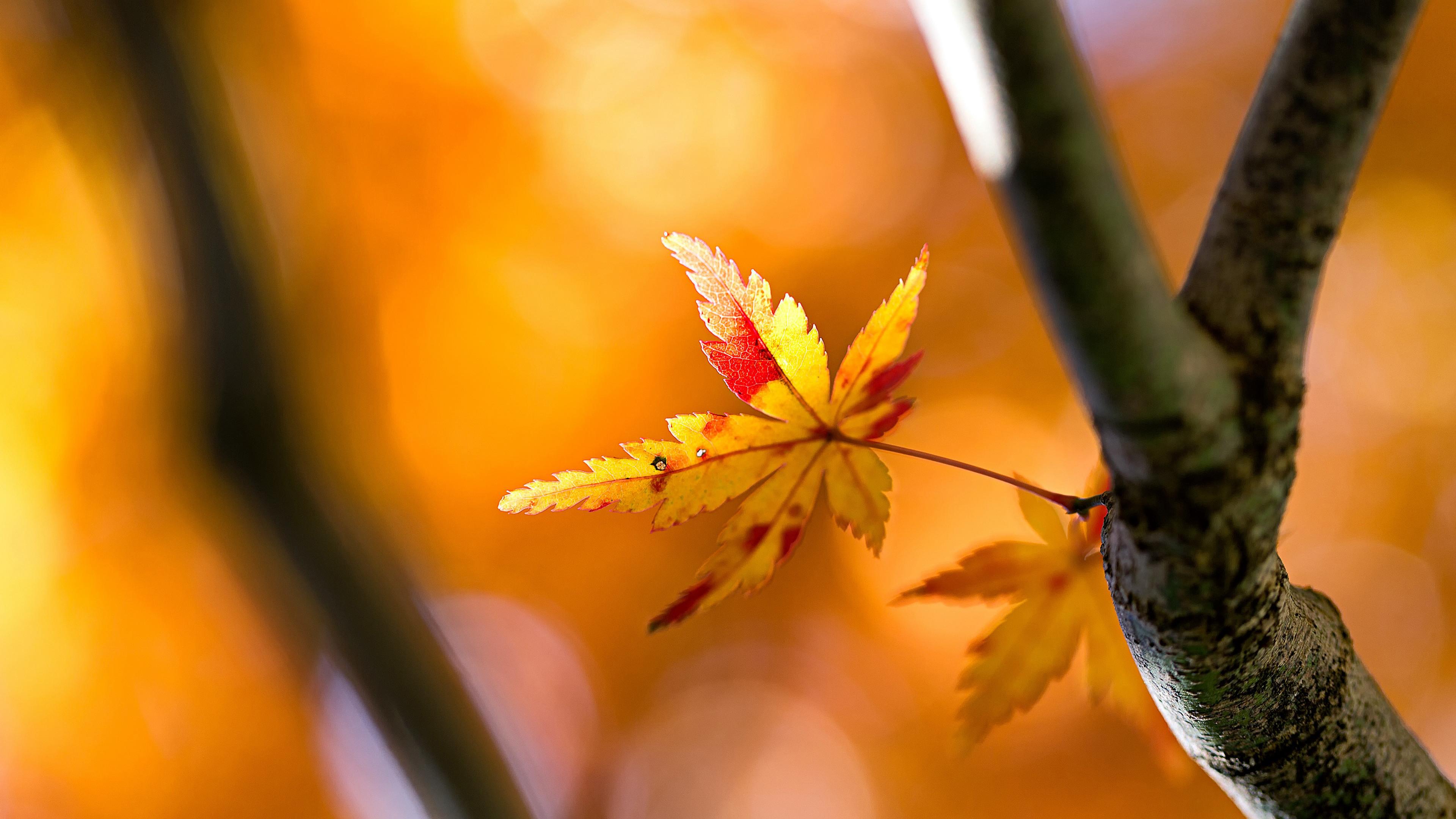 Желто-красные осенние листья