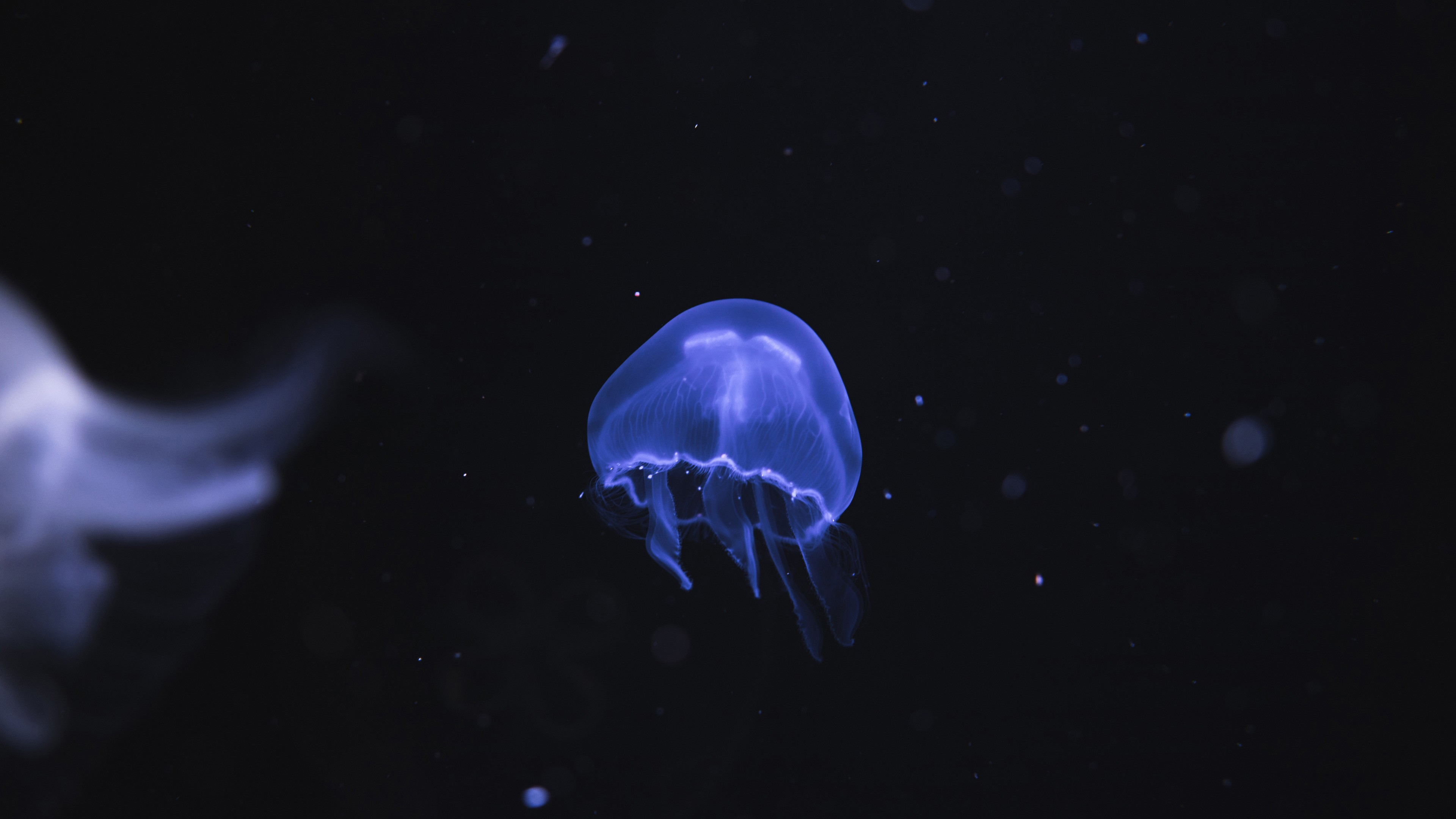 Неоновые медузы