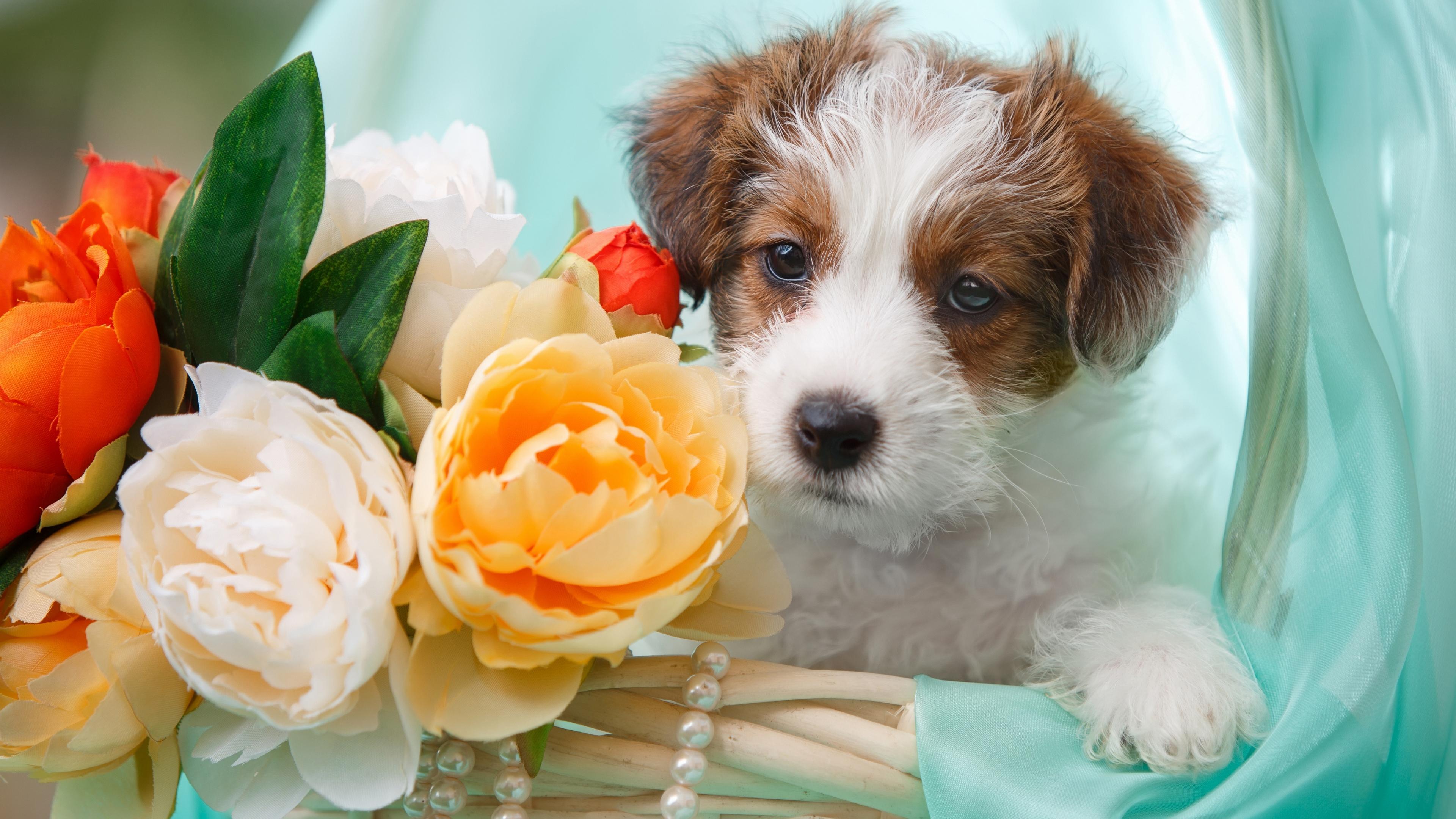 Милый пушистый щенок и букет цветов