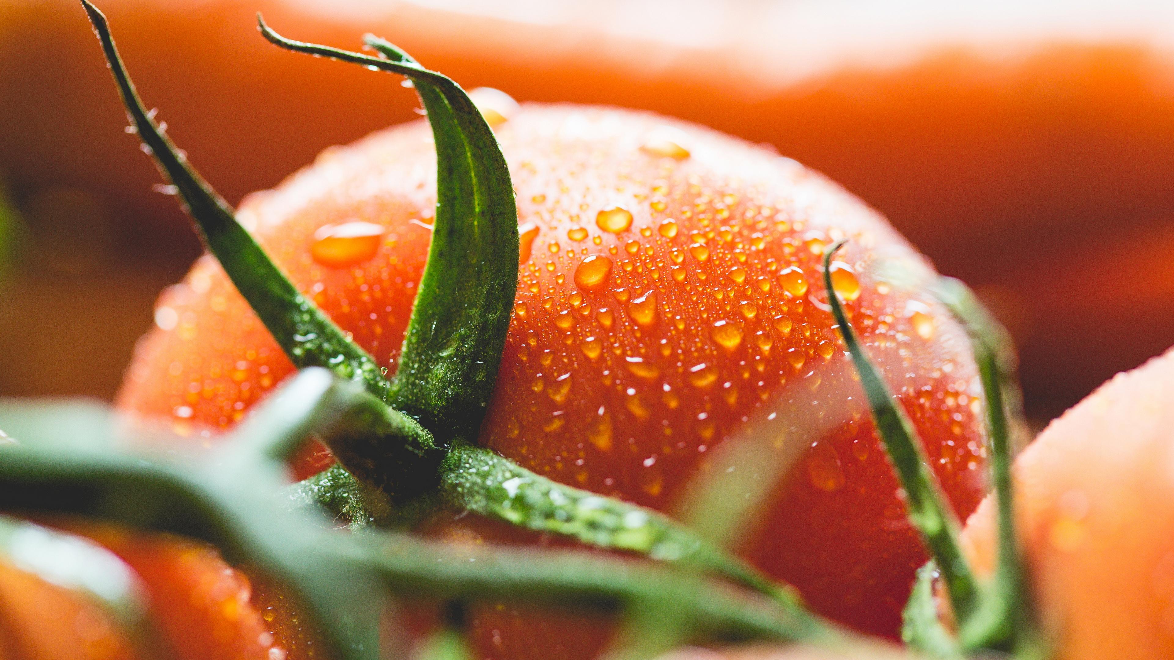 Красные помидоры в капельках росы