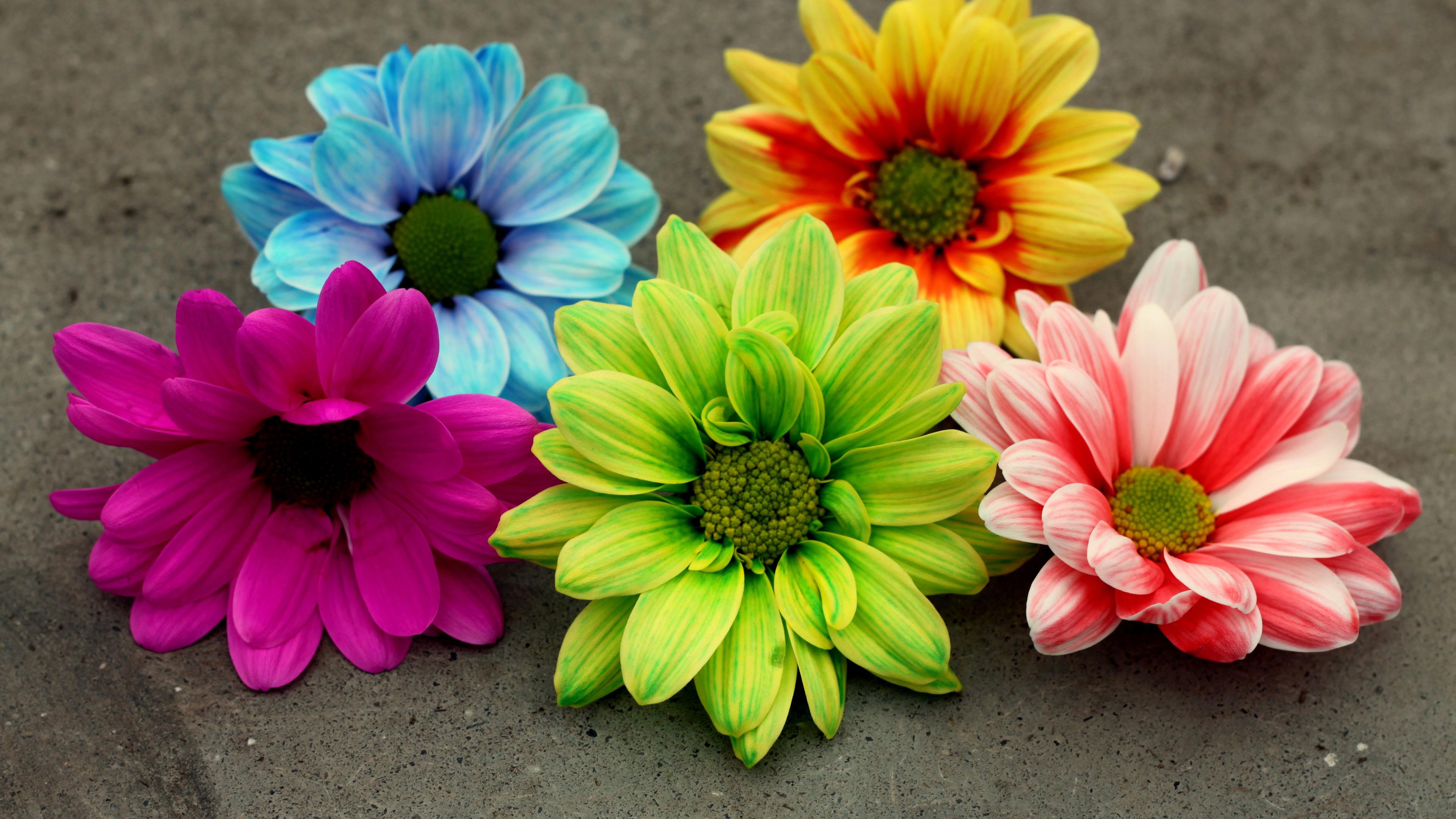 Цветовая гамма цветов георгины