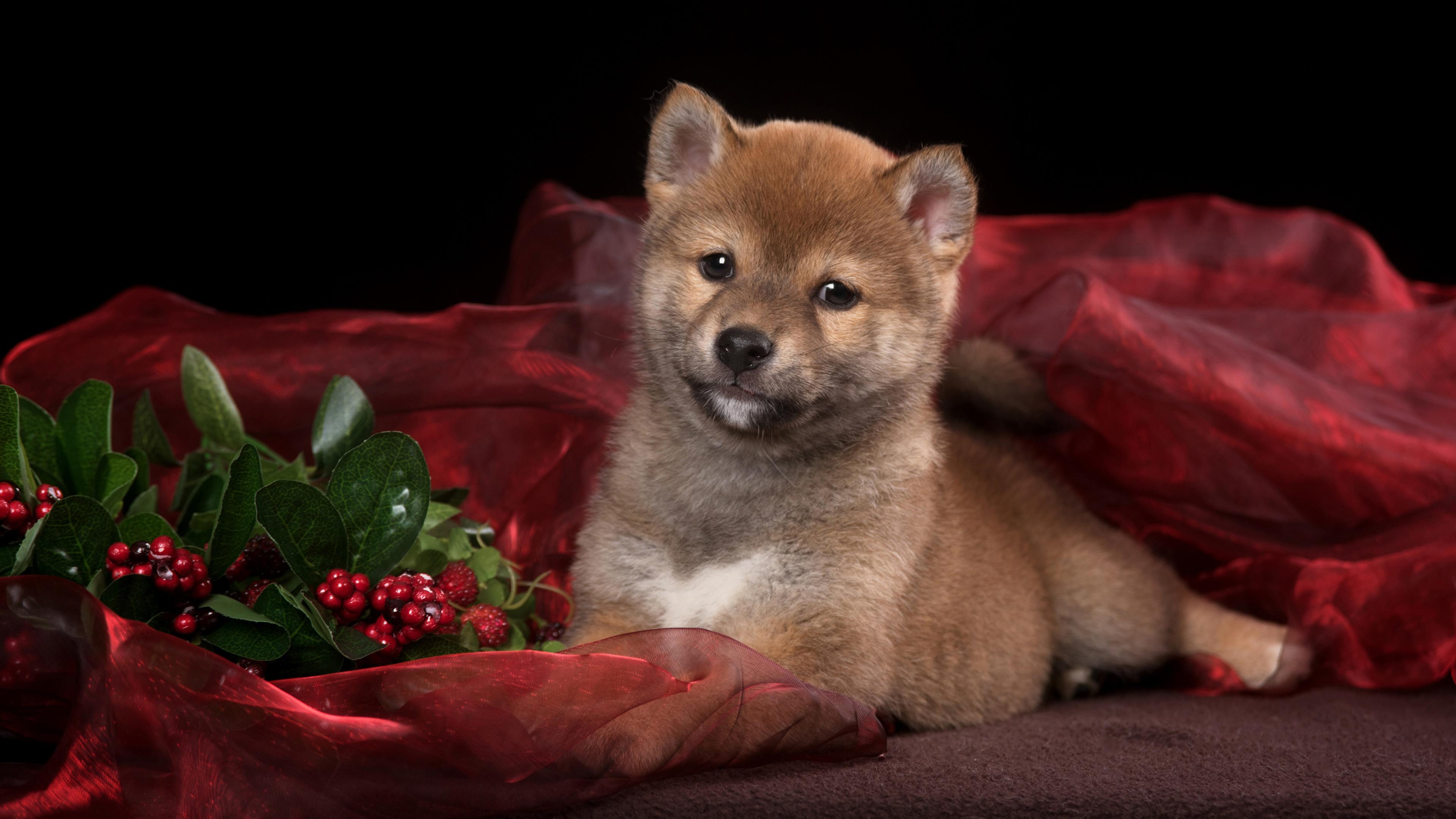 Милый щенок с блестящими глазами и плюшевым мехом