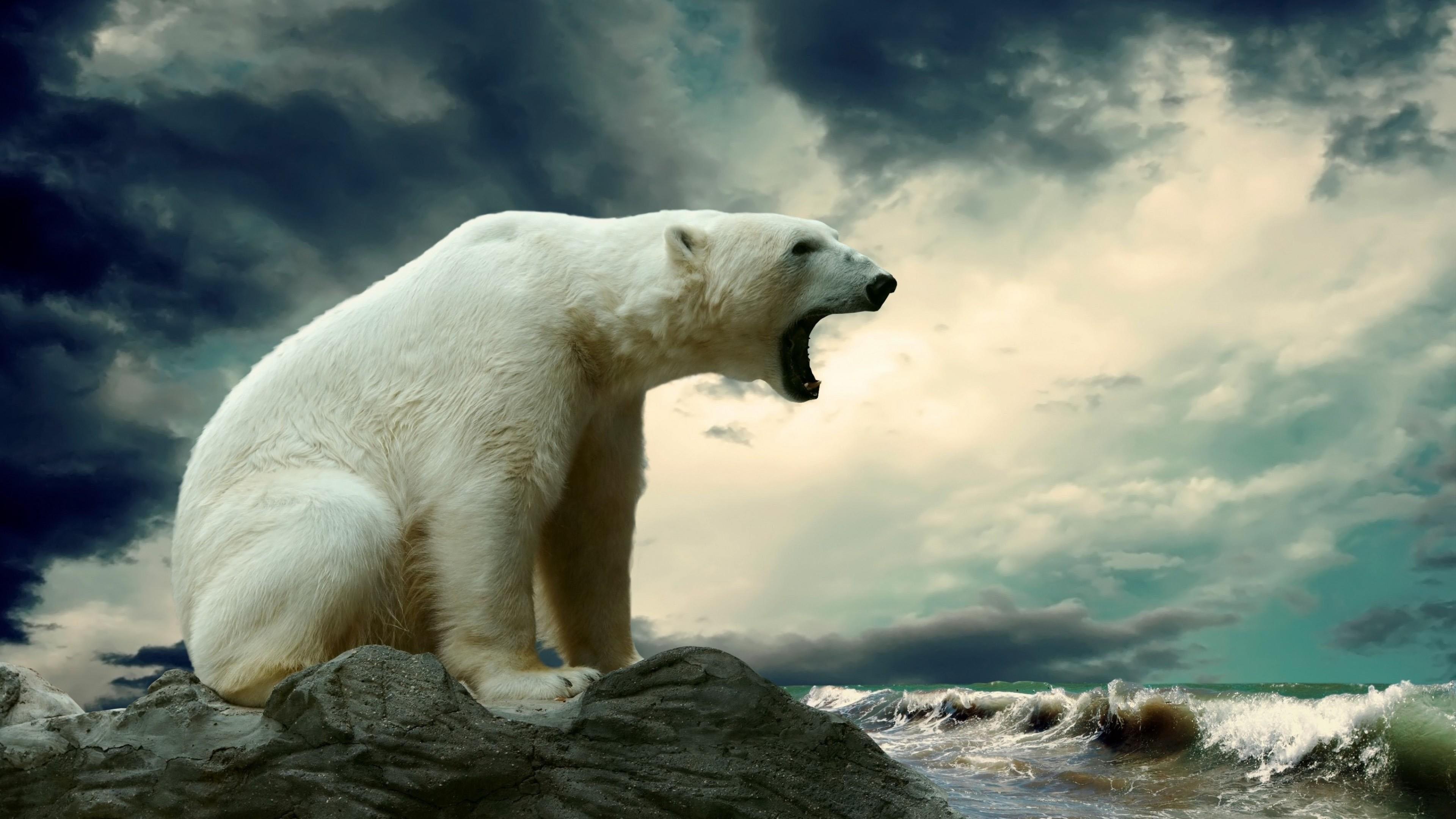Большой,белый северный медведь на льдине в волнах Ледовитого океана с открытой пастью вышел на охоту