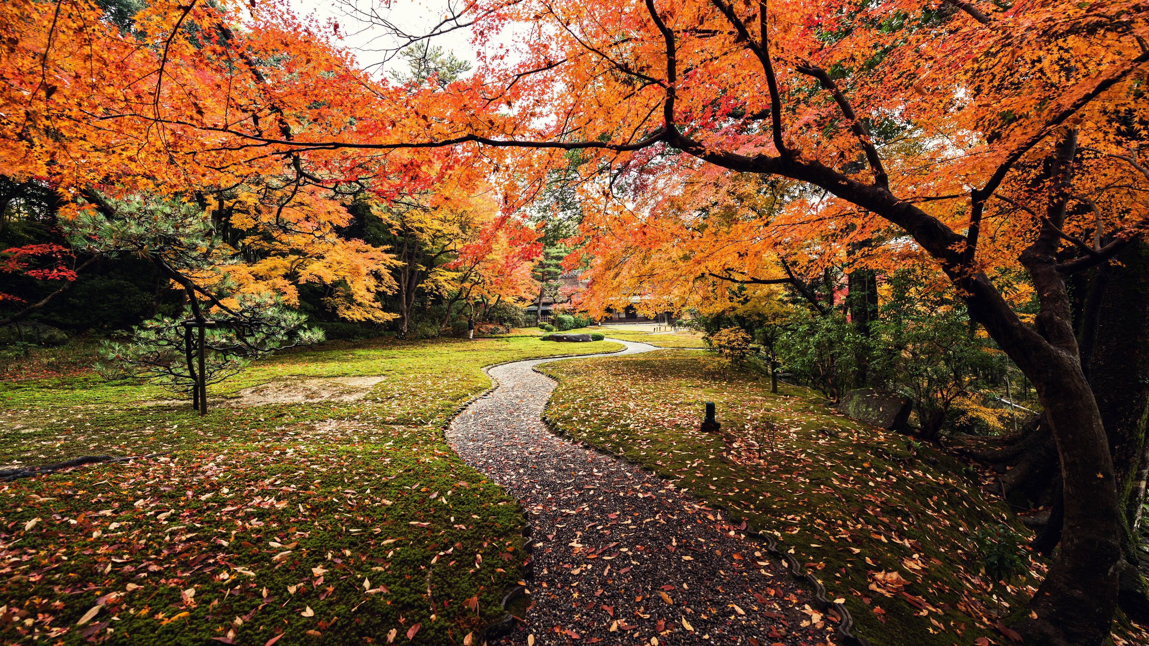 Осенний багряно-желтый лиственный лес с извилистой тропинкой
