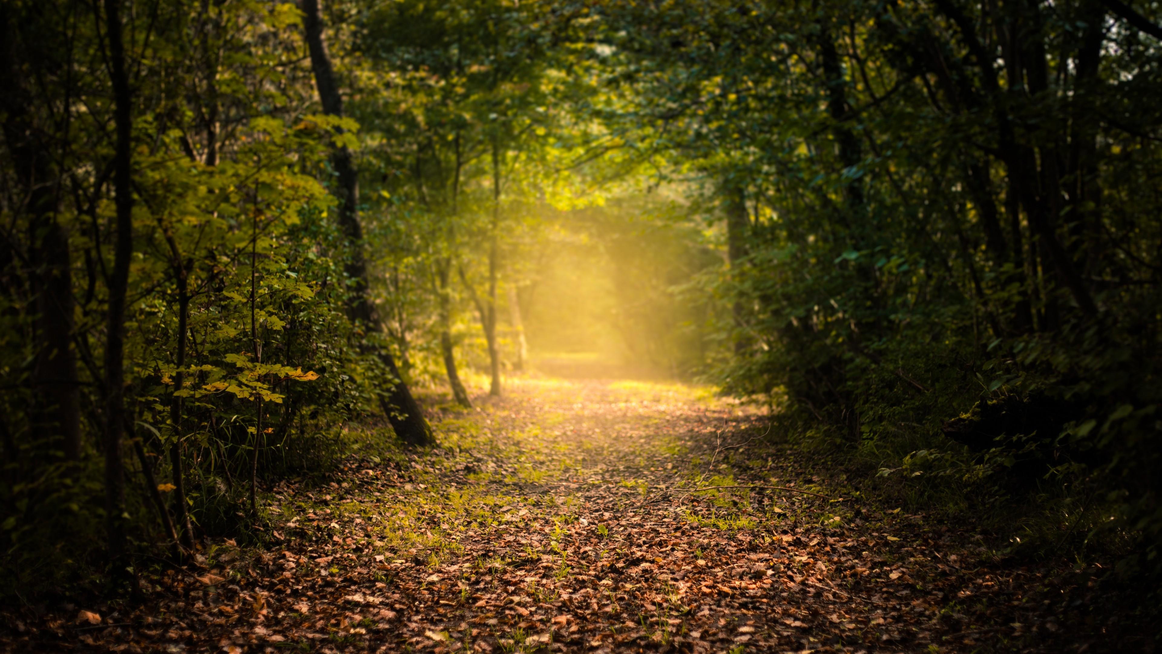 Золотые солнечные лучи озарили осенний лес