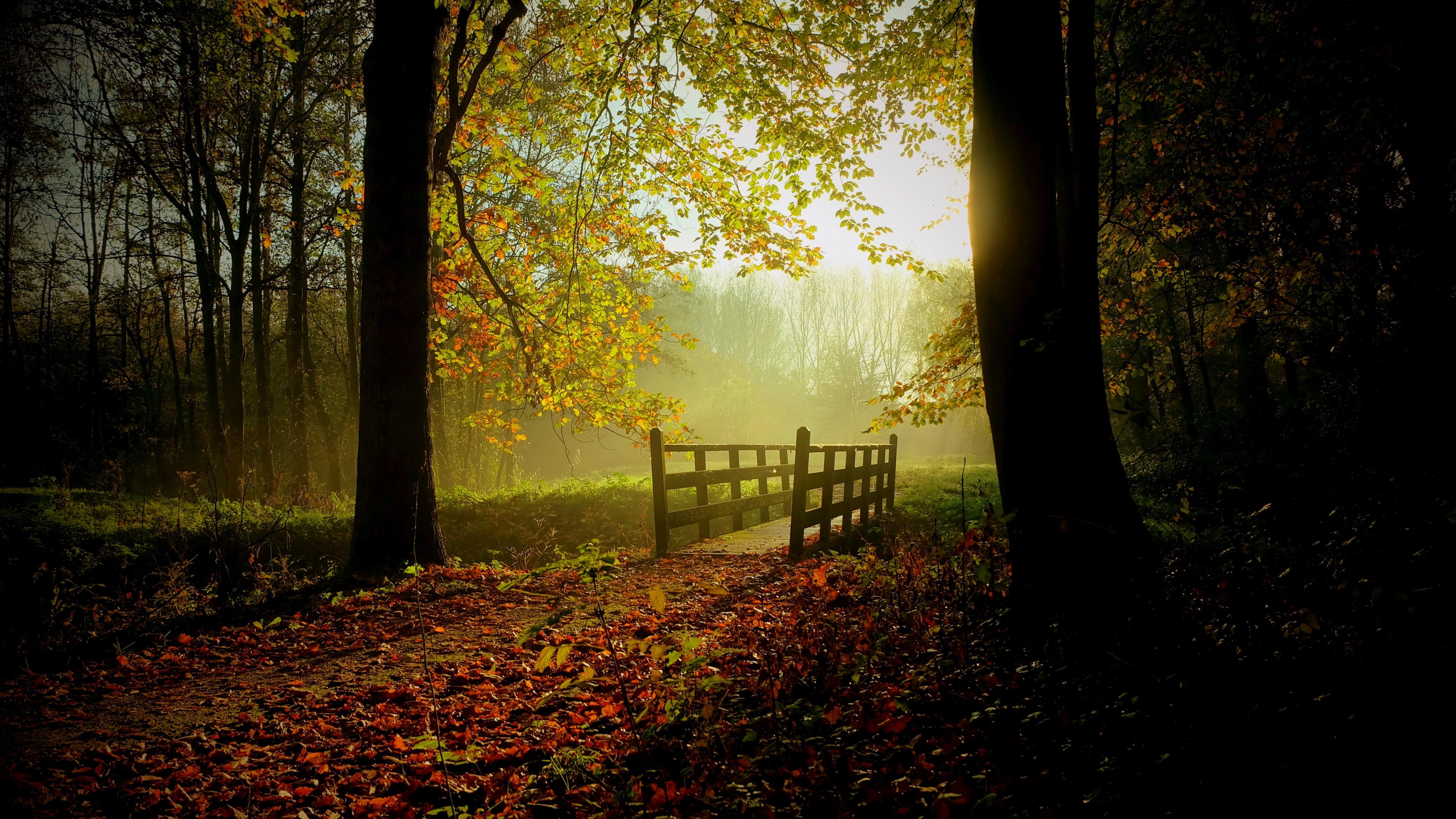 Вечерний осенний лес в отблесках заходящего солнца