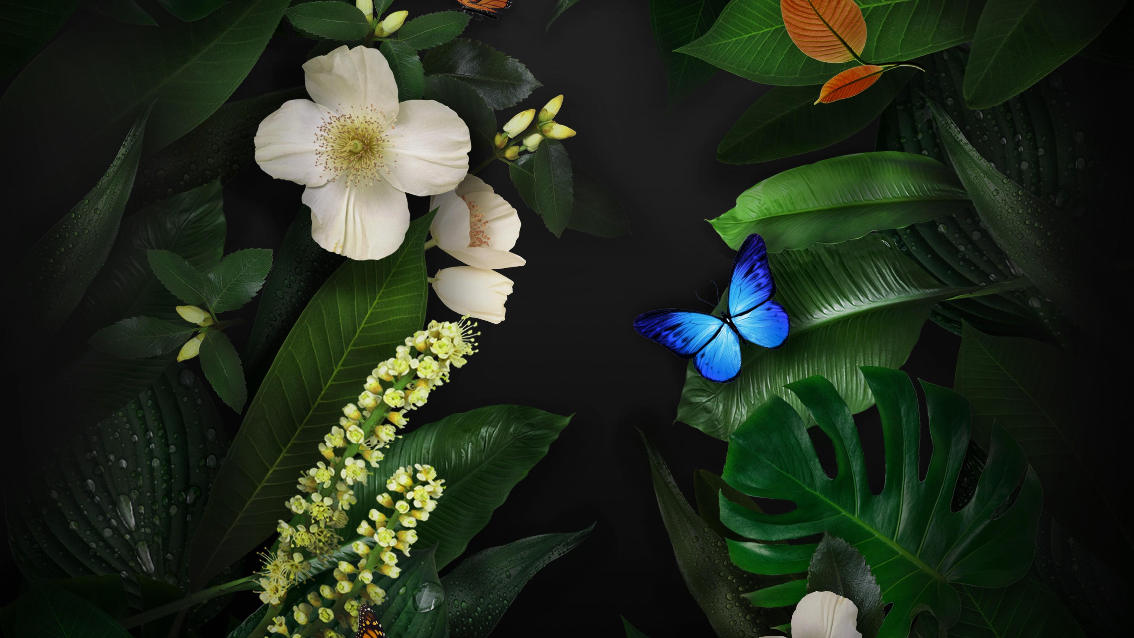 Красивая голубая бабочка на темно-зеленых листьях отражает свет на белые цветы
