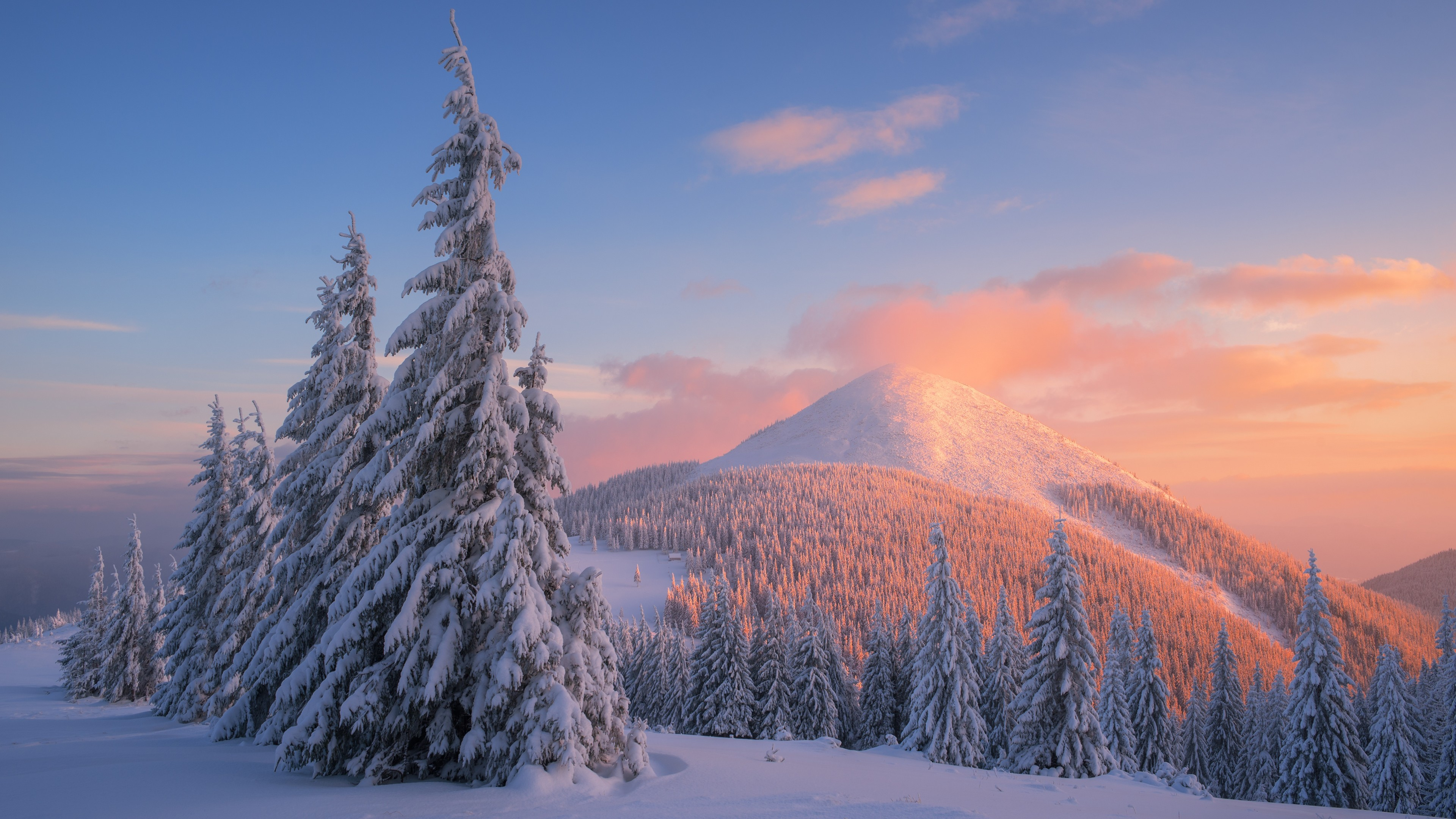 Снежная горная вершина в розово-золотых отблесках солнца и блестящего инея на заснеженных лапах сосны