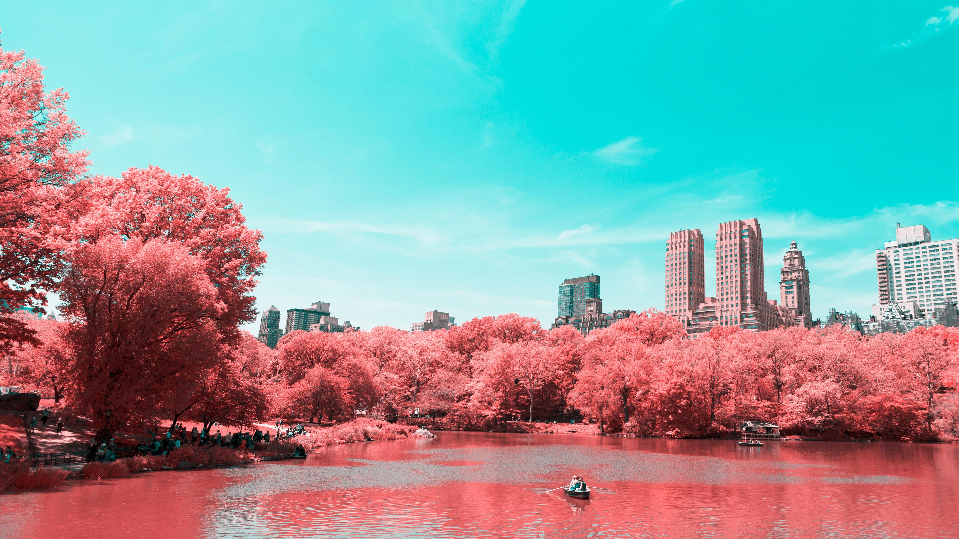 Цветущие розовые пышные деревья у берега водоема  в отблесках лучей  солнца и бирюзового неба