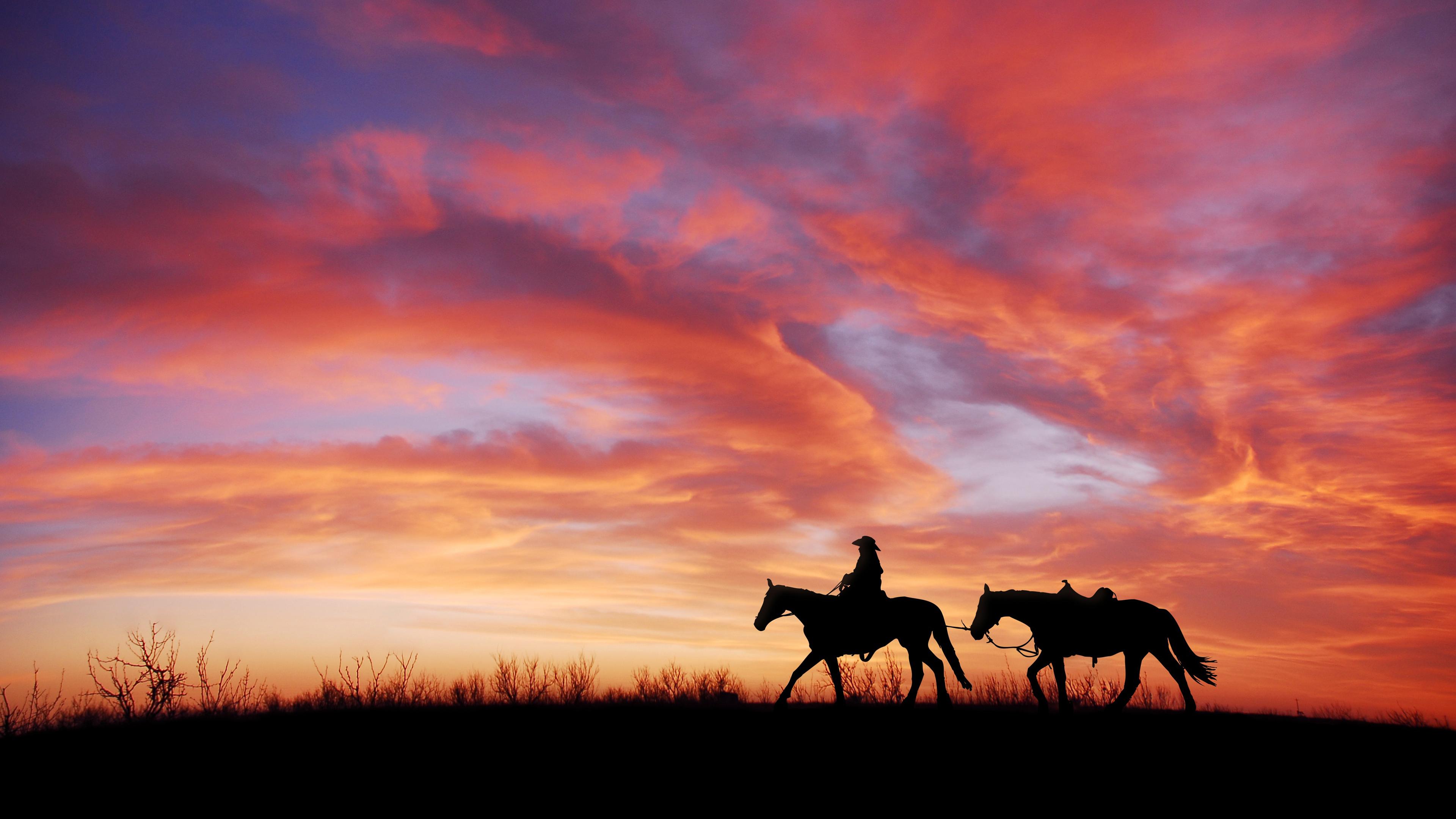 Изящные силуэты лошадей в огненно-рыжих лучах небосвода