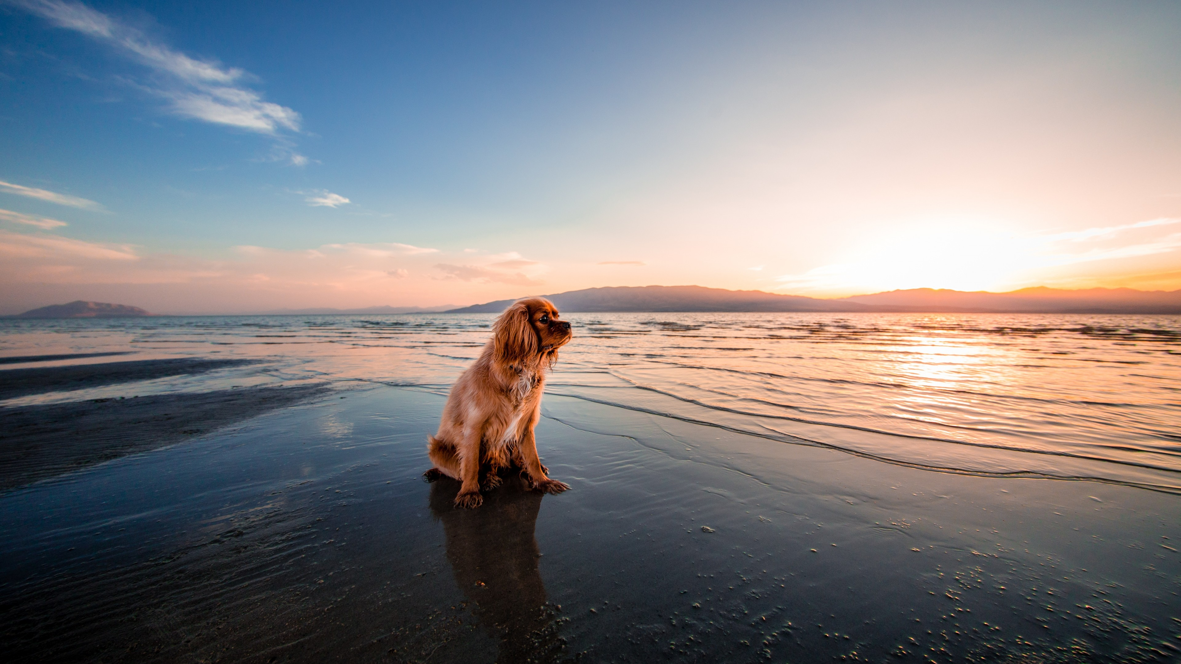 Рыжий пес на морском берегу в лучах рассветного солнечного утра