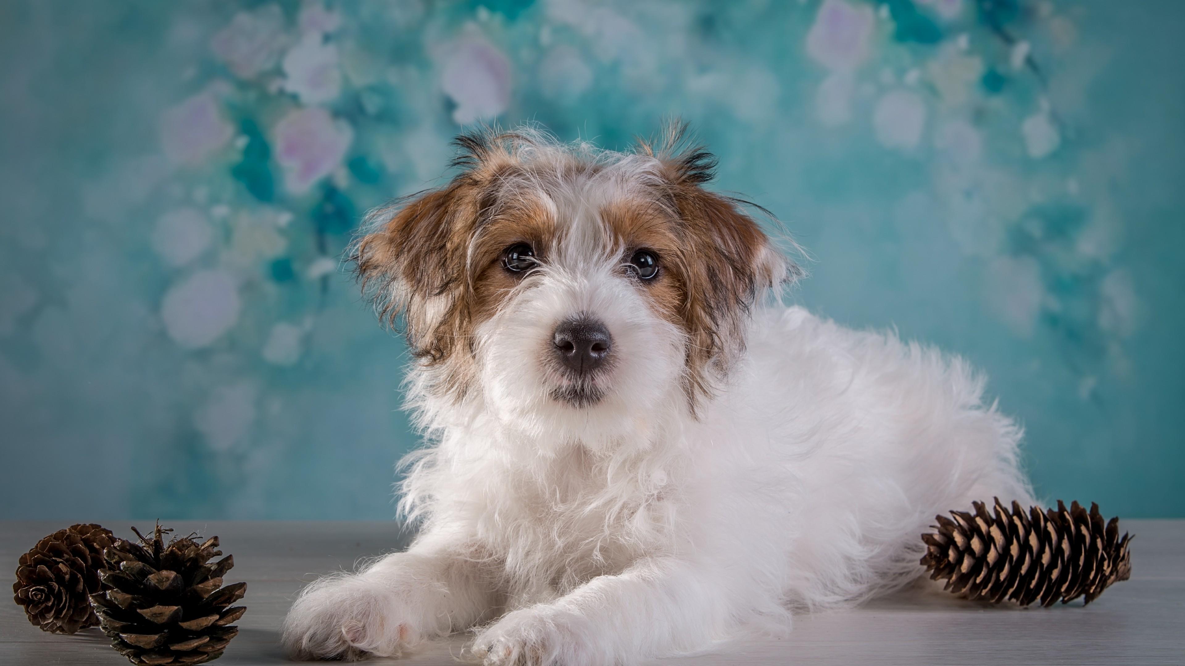Очаровательный пушистый белый щенок с карими блестящими глазами
