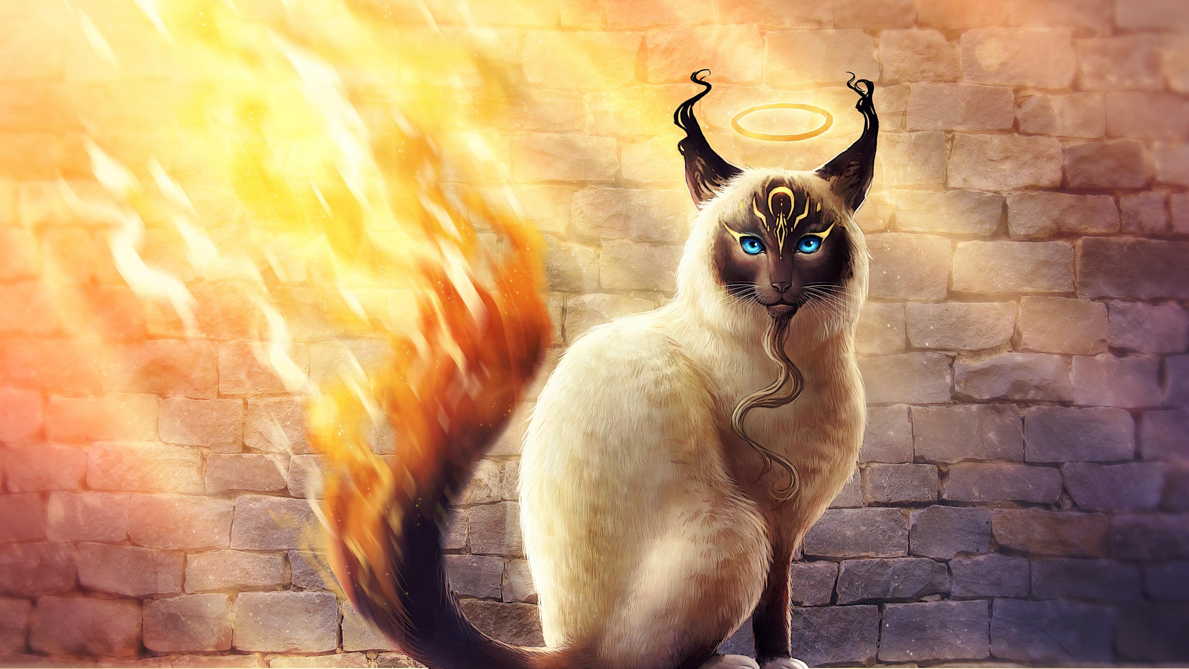 Волшебный кот с голубыми глазами с сияющим нимбом над головой,бородой и огненным хвостом