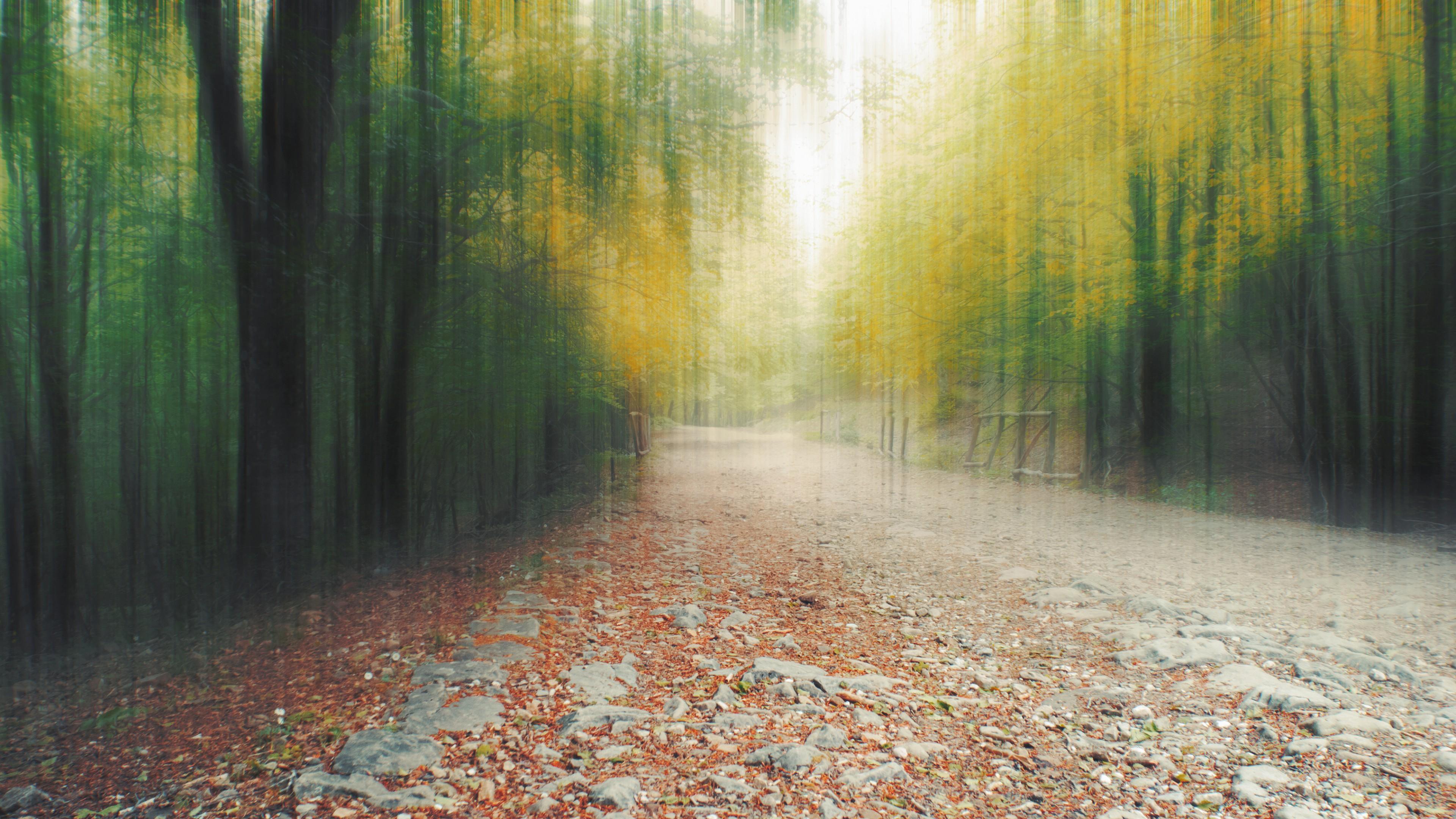 Фон  осенний размытый лес в каплях дождя и лужах