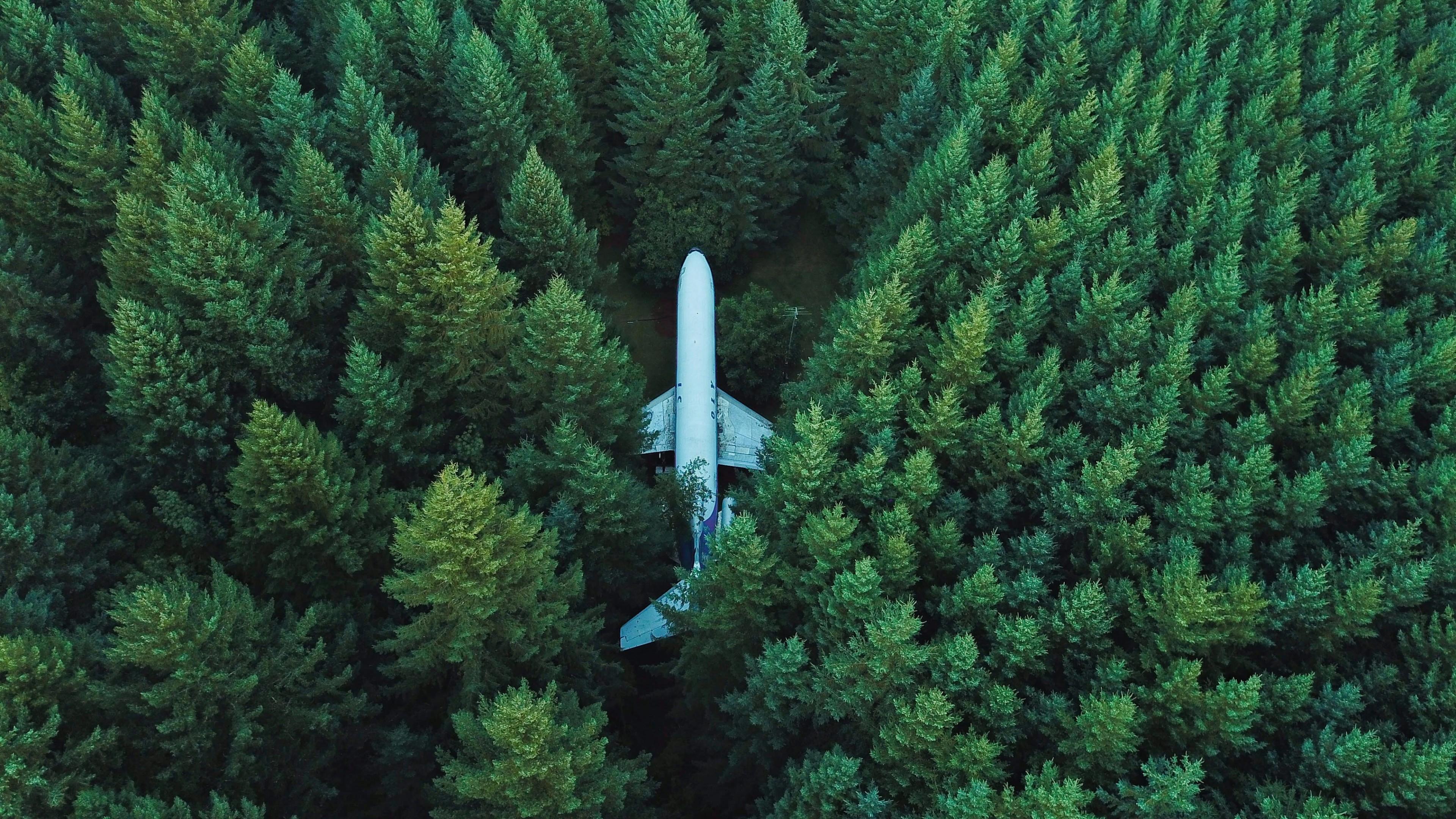 Крылья самолета в пышных хвойных ветках молодых елочек