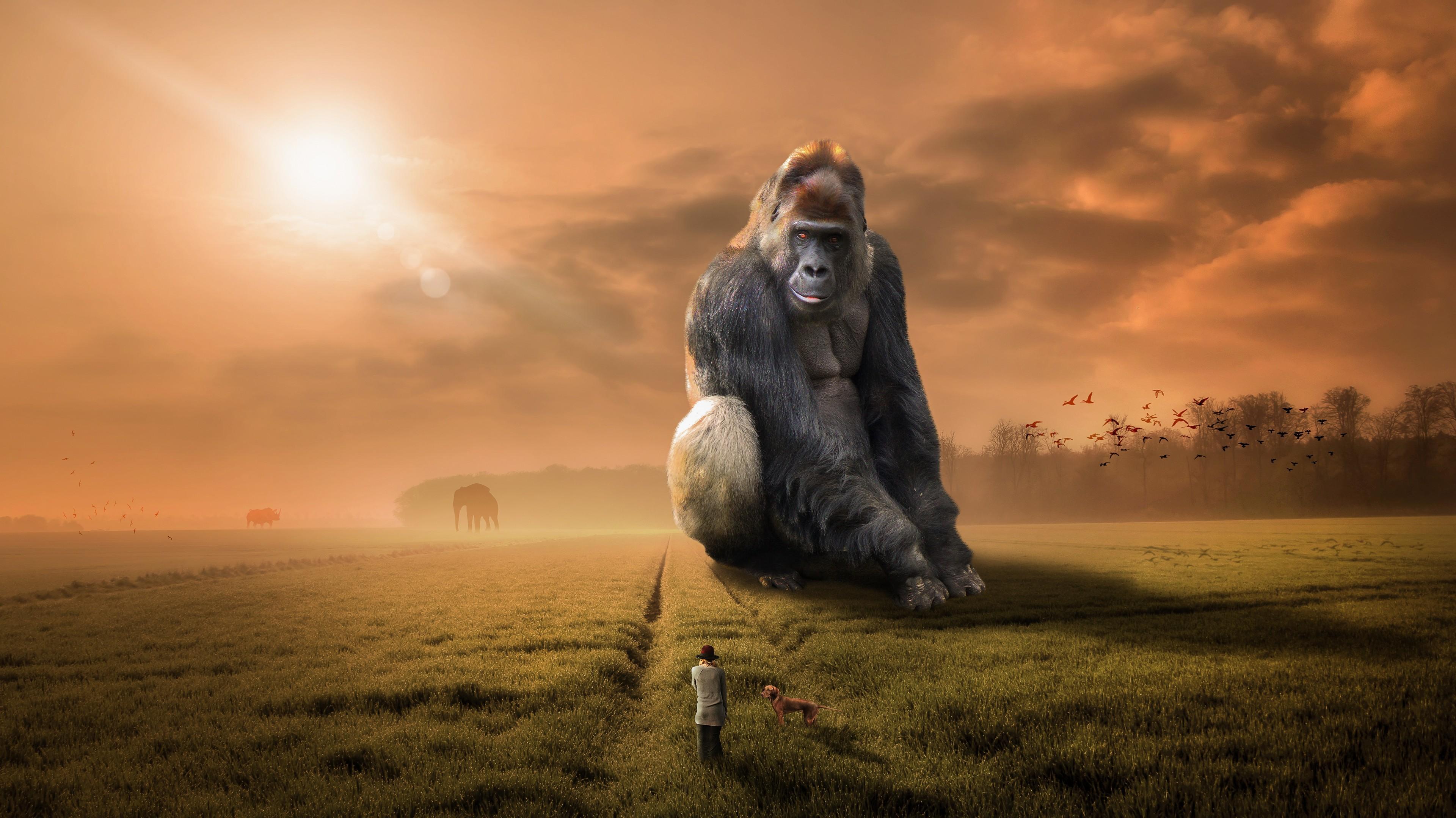Крупная горилла на зеленом лугу в отблесках солнечных лучей