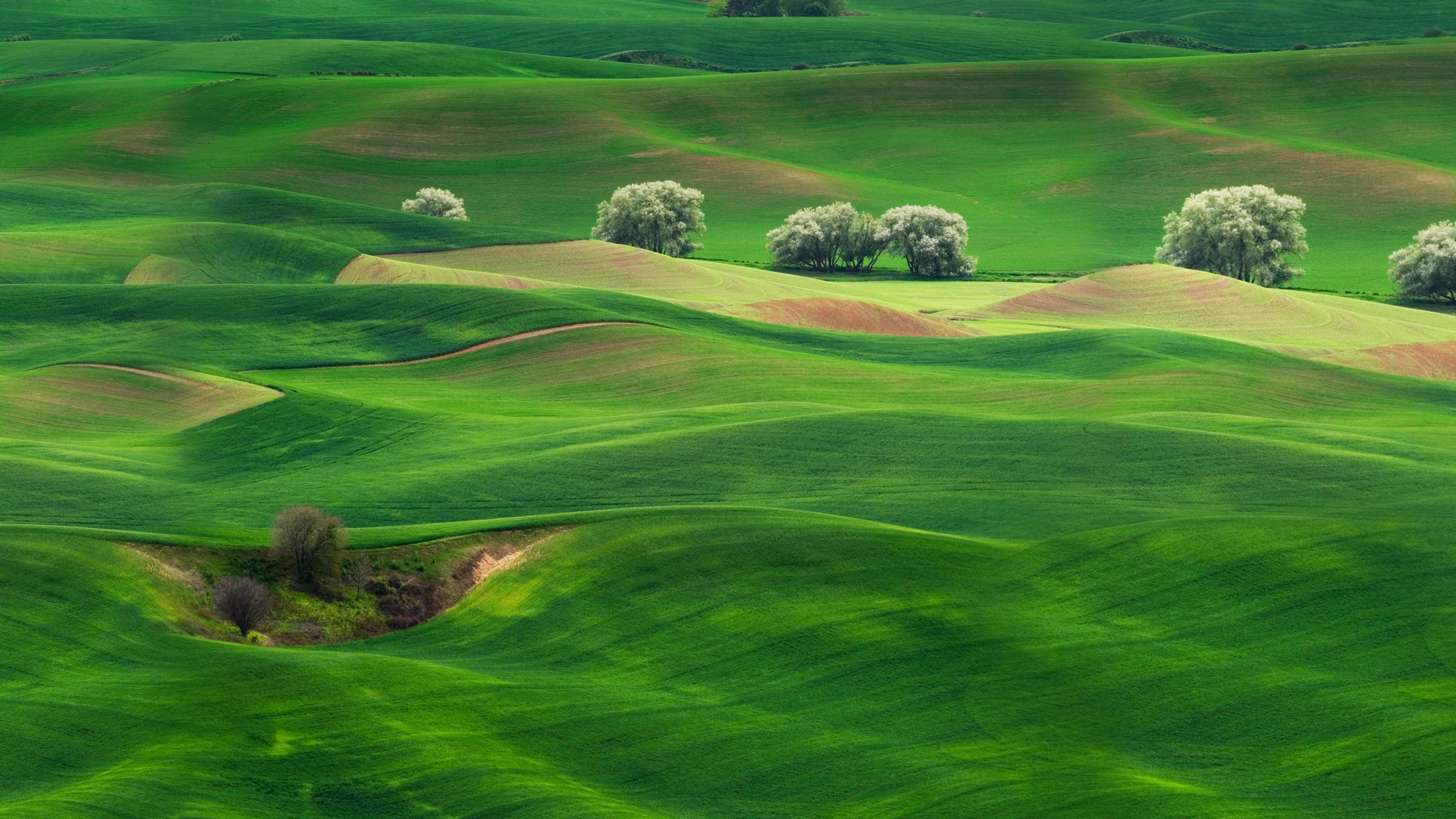 Ландшафтный дизайн изумрудно-зеленых шелковых лугов